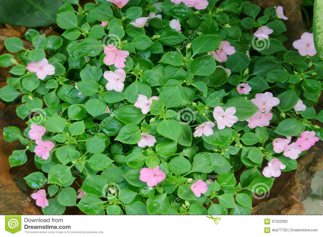 Flower beds in the park stock photo image of nature for Beautiful flower beds