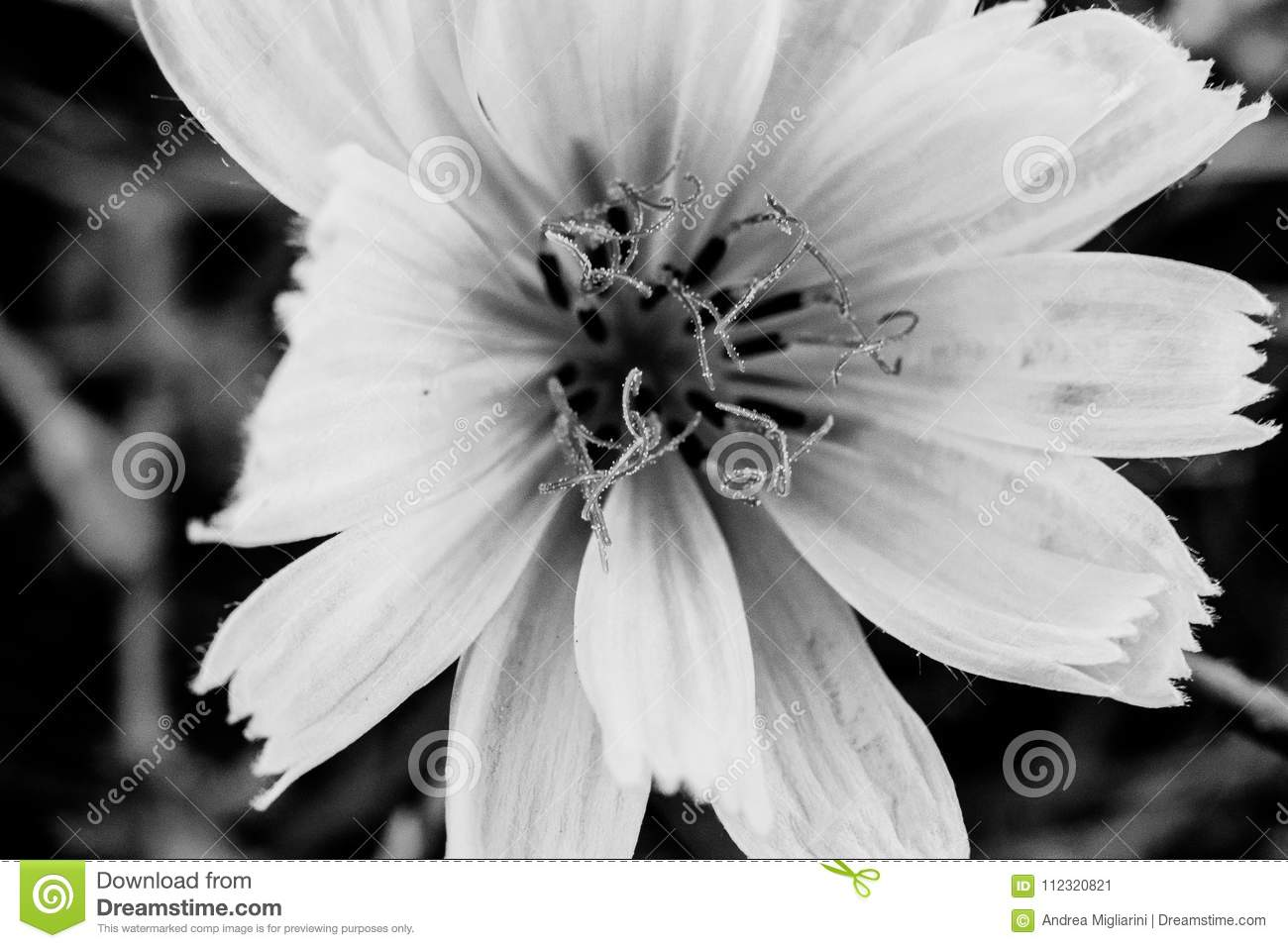 Flower In Black And White Macro And Details Of Abstract Nature