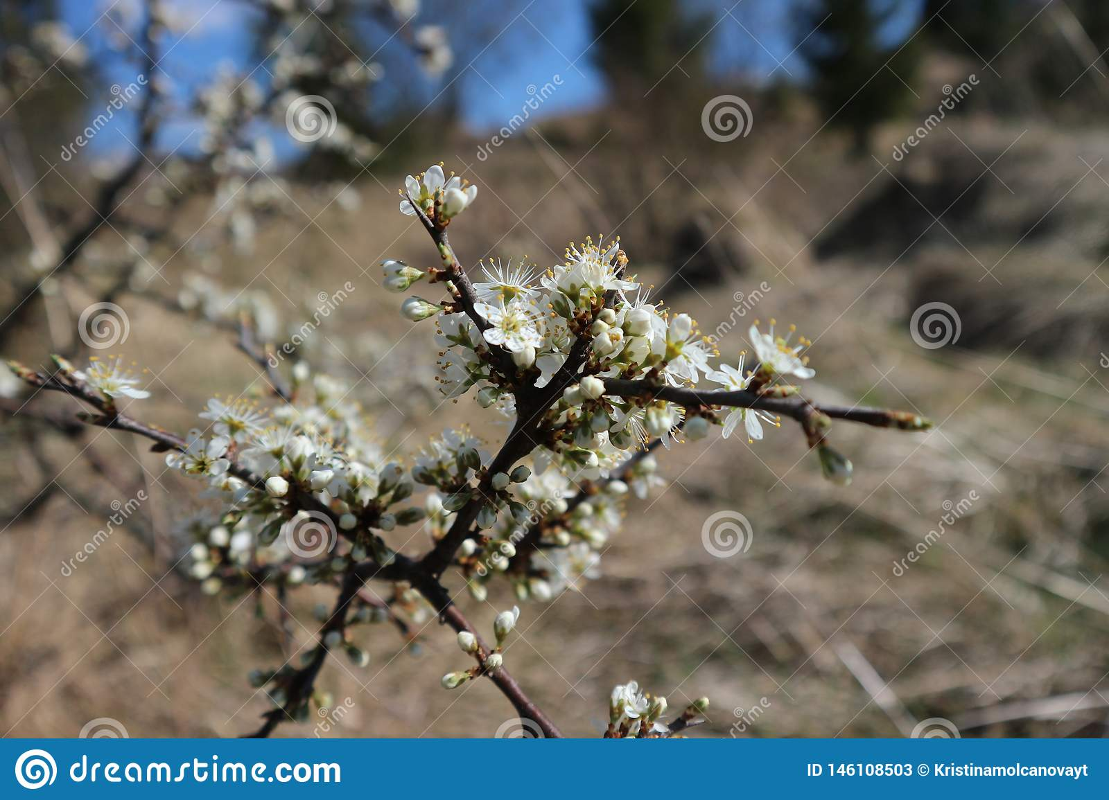 Flowers on the tree on the land.