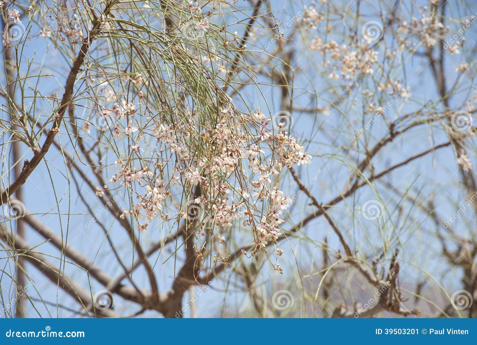 Flower blossom on a desert tree