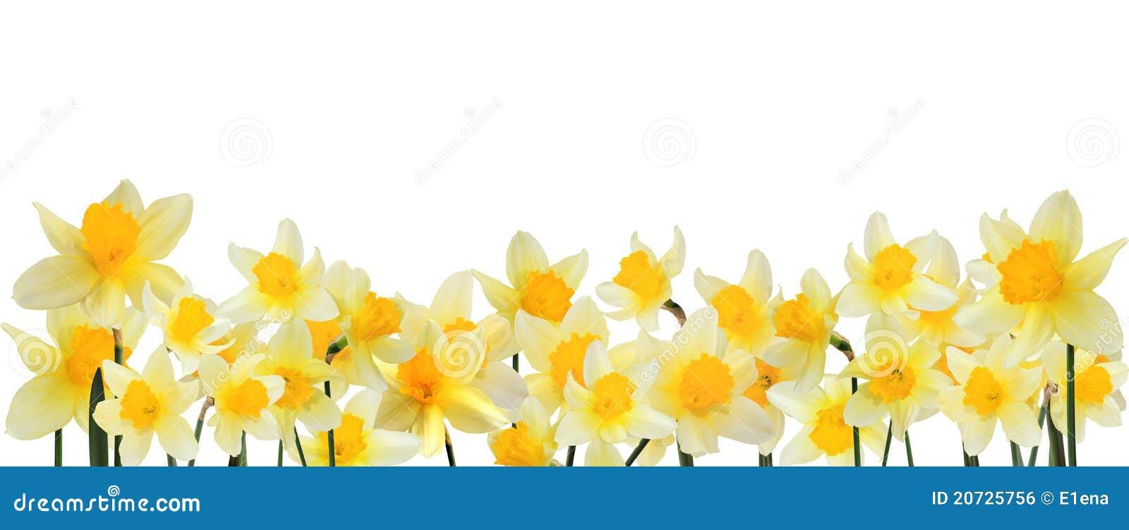 Flower Bottom Border Flower Inspiration