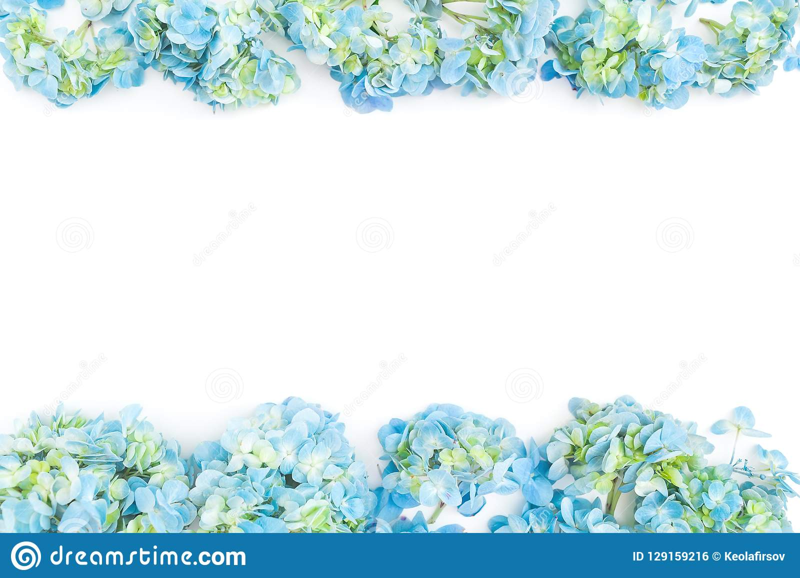 Flower border frame of blue hydrangea flowers on white background. Flat lay, top view. Floral background