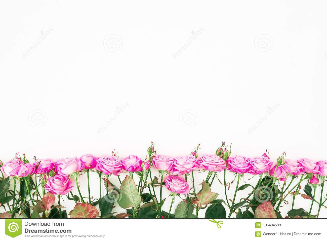 Flower border pattern of pink roses, branches and leaves on white background. Flat lay, Top view.
