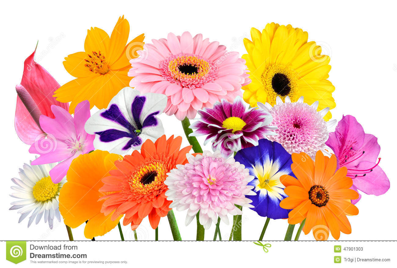 Flower Bouquet Collection of Various Colorful Flowers and Wildflowers ...