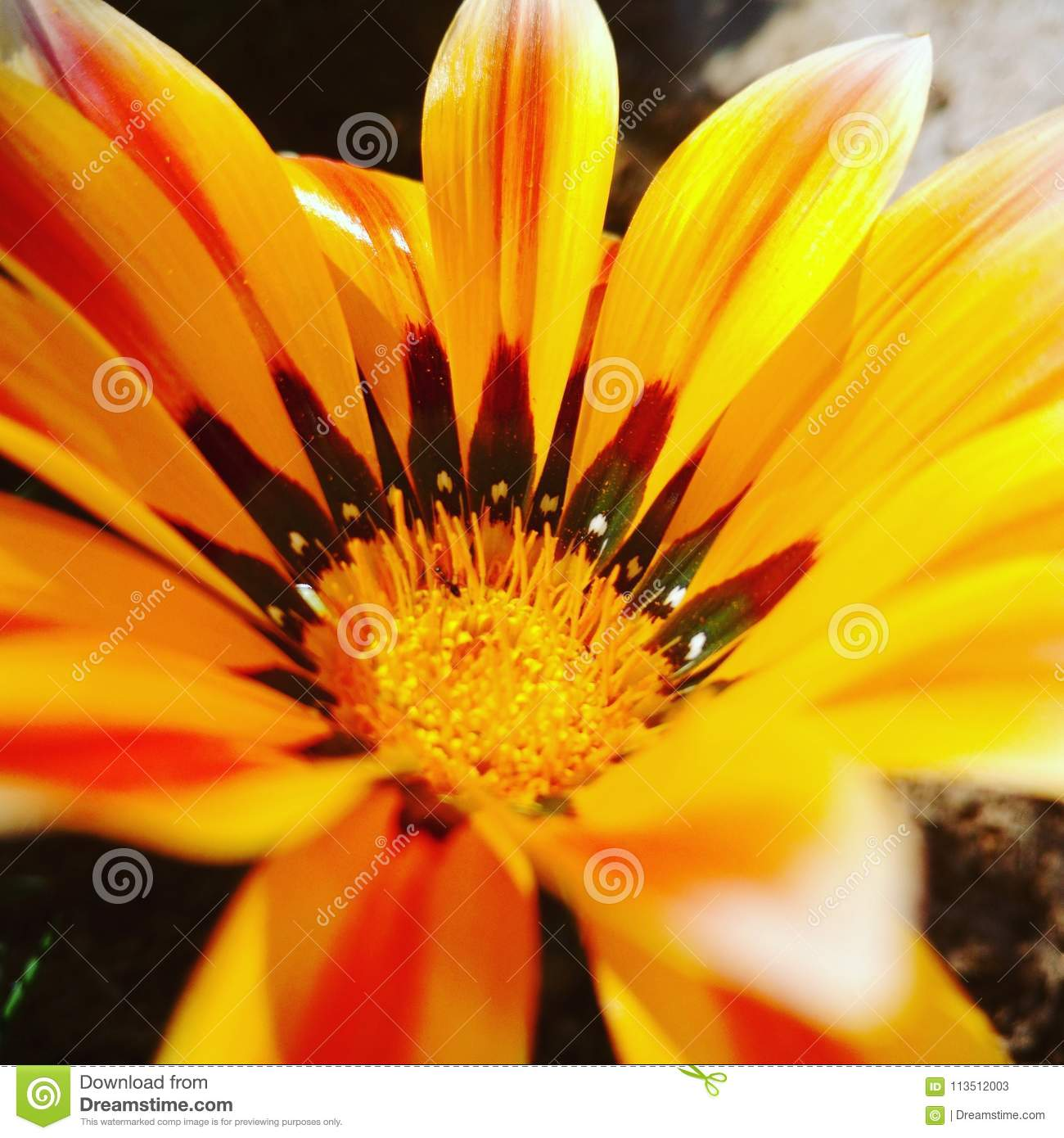 Flower bright yellow close up color pop to you garden stock image flower bright yellow close up color pop to you garden mightylinksfo