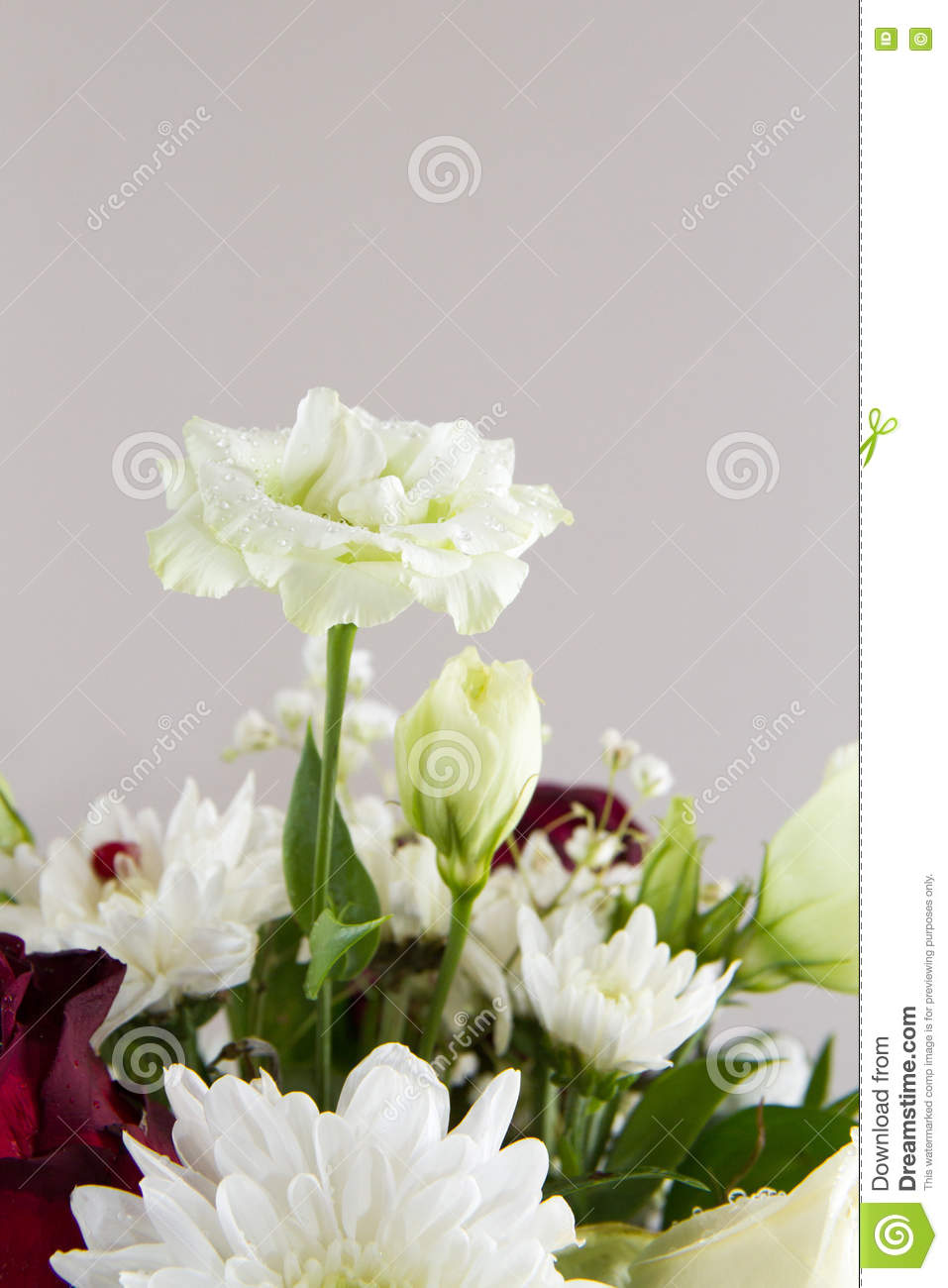Flower Bunch Stock Image Image Of Dahlia White Bunch 77034217