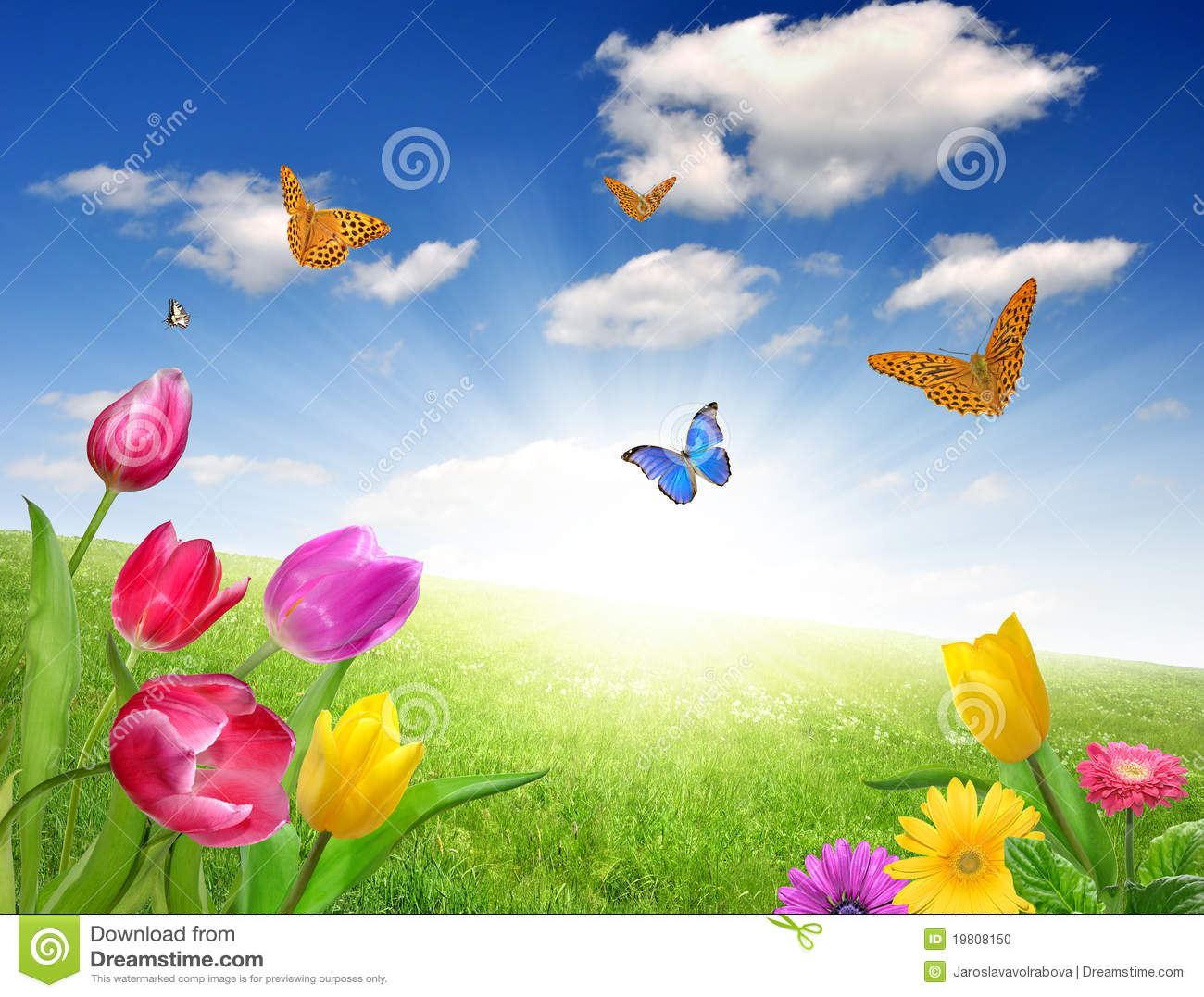 Flower With Butterfly Stock Photo Image Of Plant Greeting