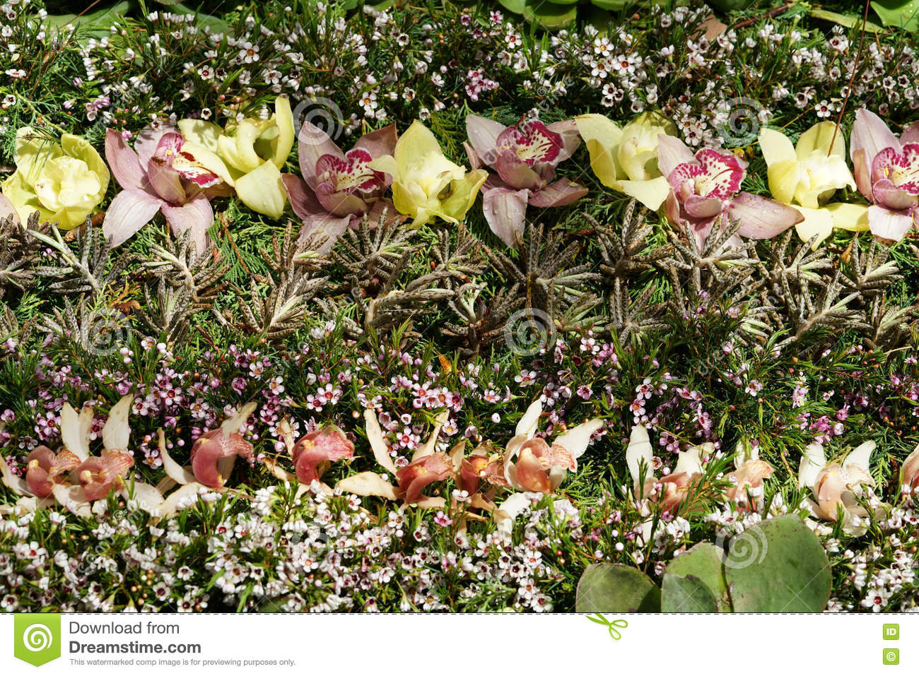 Flower Carpet With Pink White Tulips Stock Photo Image Of Violet