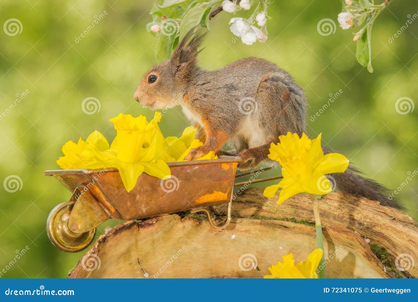Flower Carrier Stock Image