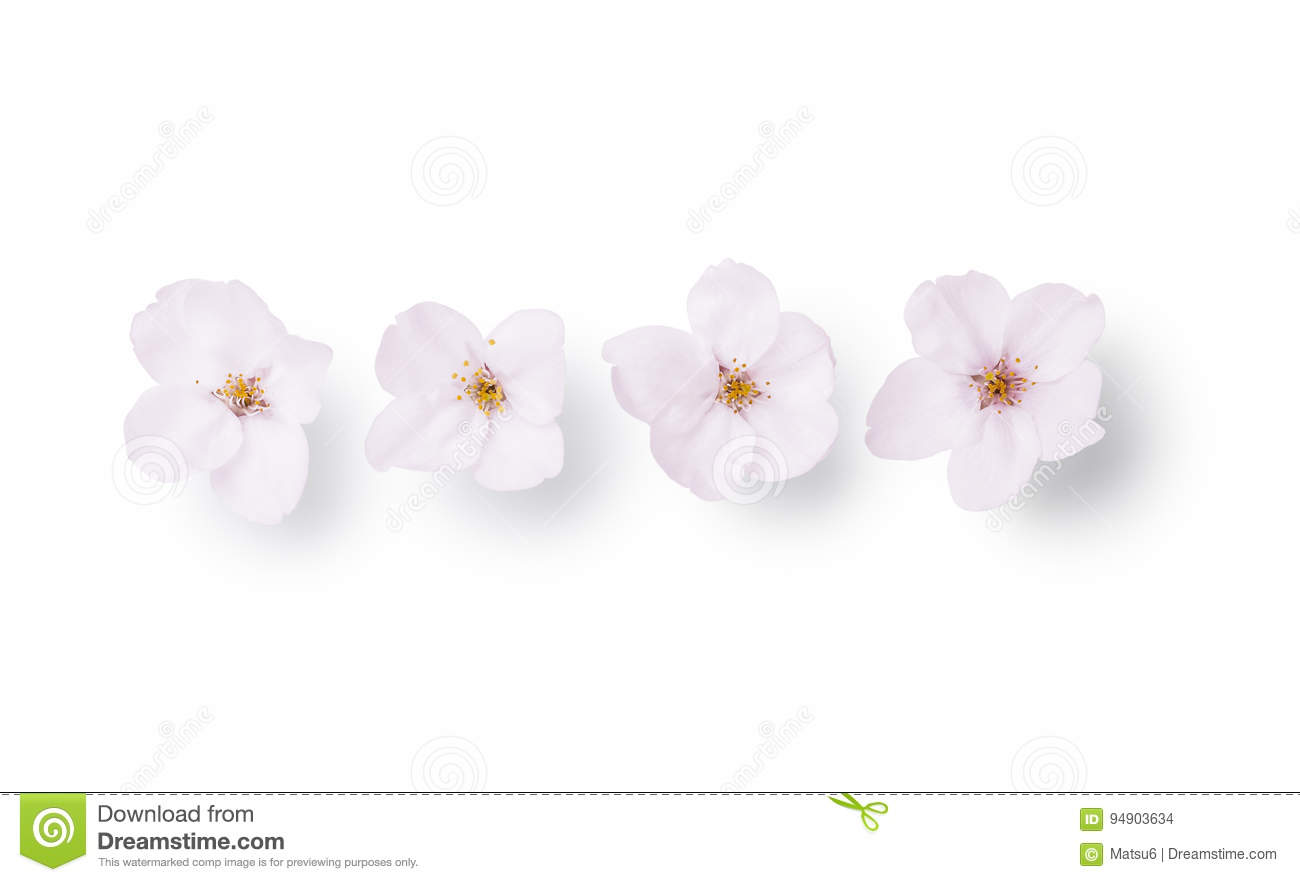 Flower Of 4 Cherry Trees Separated At A White Background Stock Photo