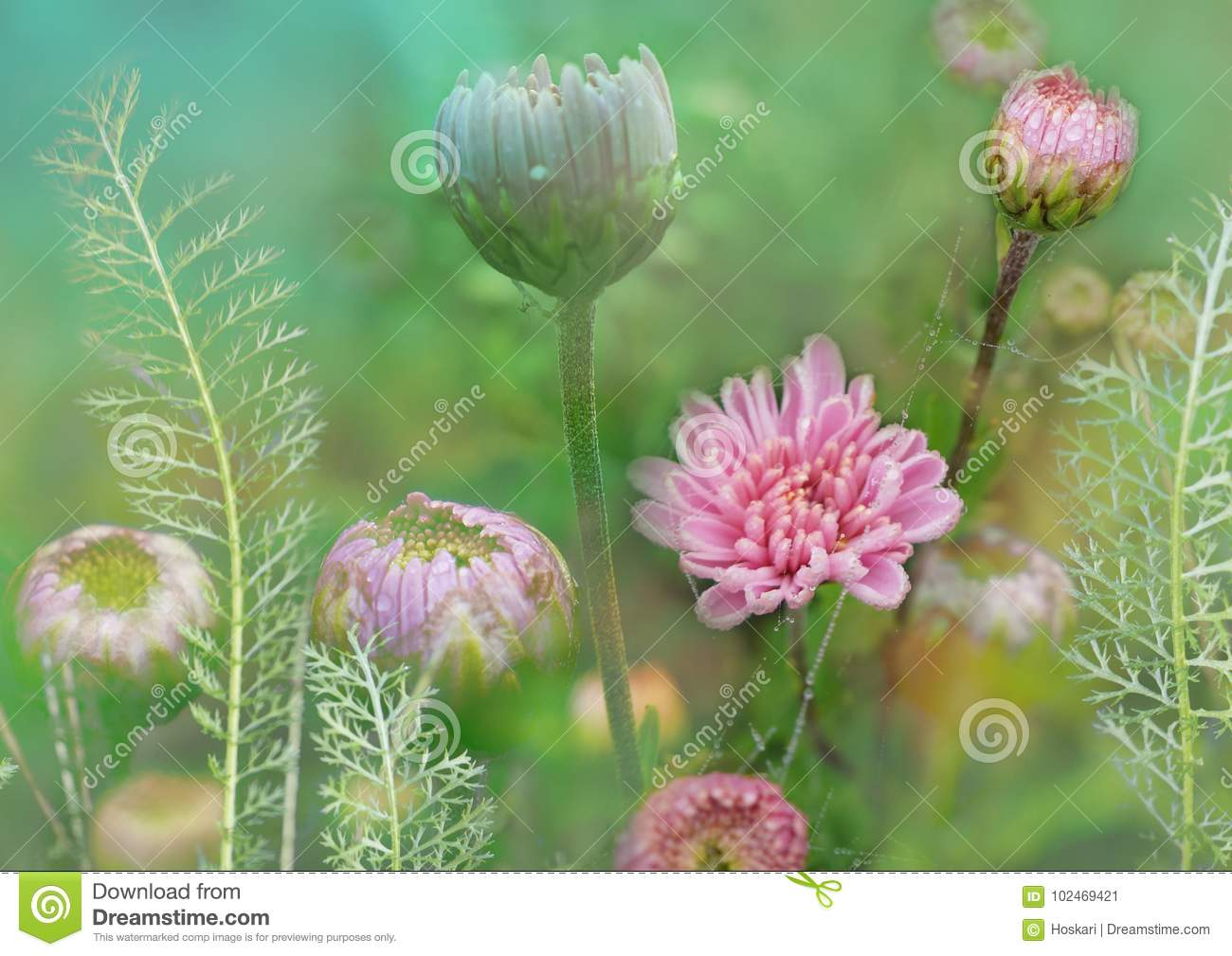 Flower with chrysanthemum and yarrow, floral meadow, plant decorative background, gentle and fragile floral illustration, floral a