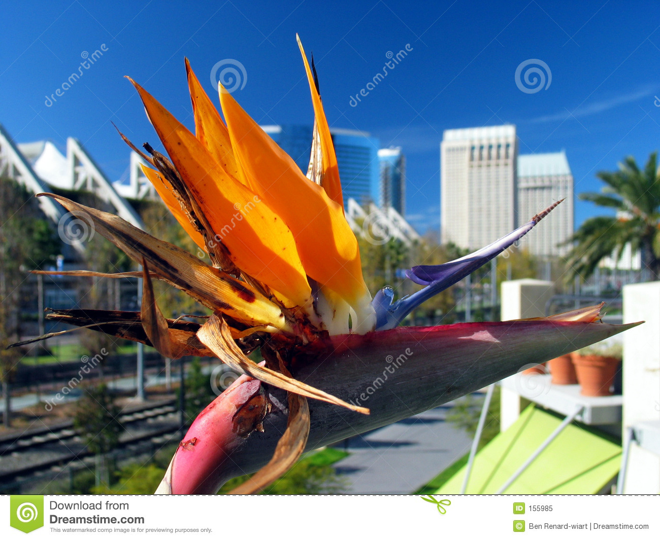 Flower close-up, with the city of San Diego in the background.
