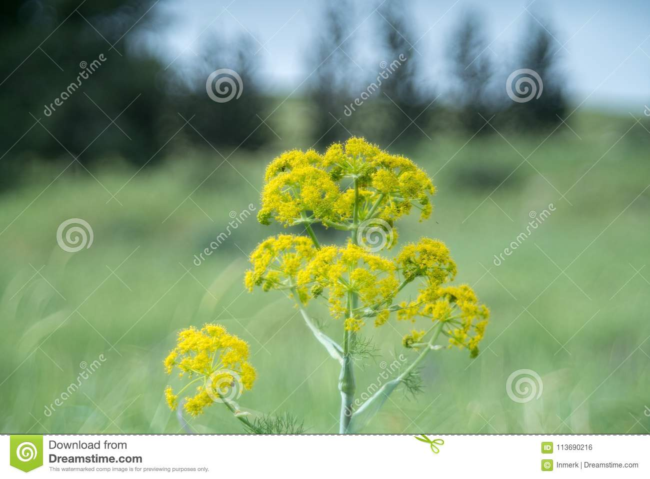 Spring Yellow Flowers On Green Grass Stock Photo Image Of