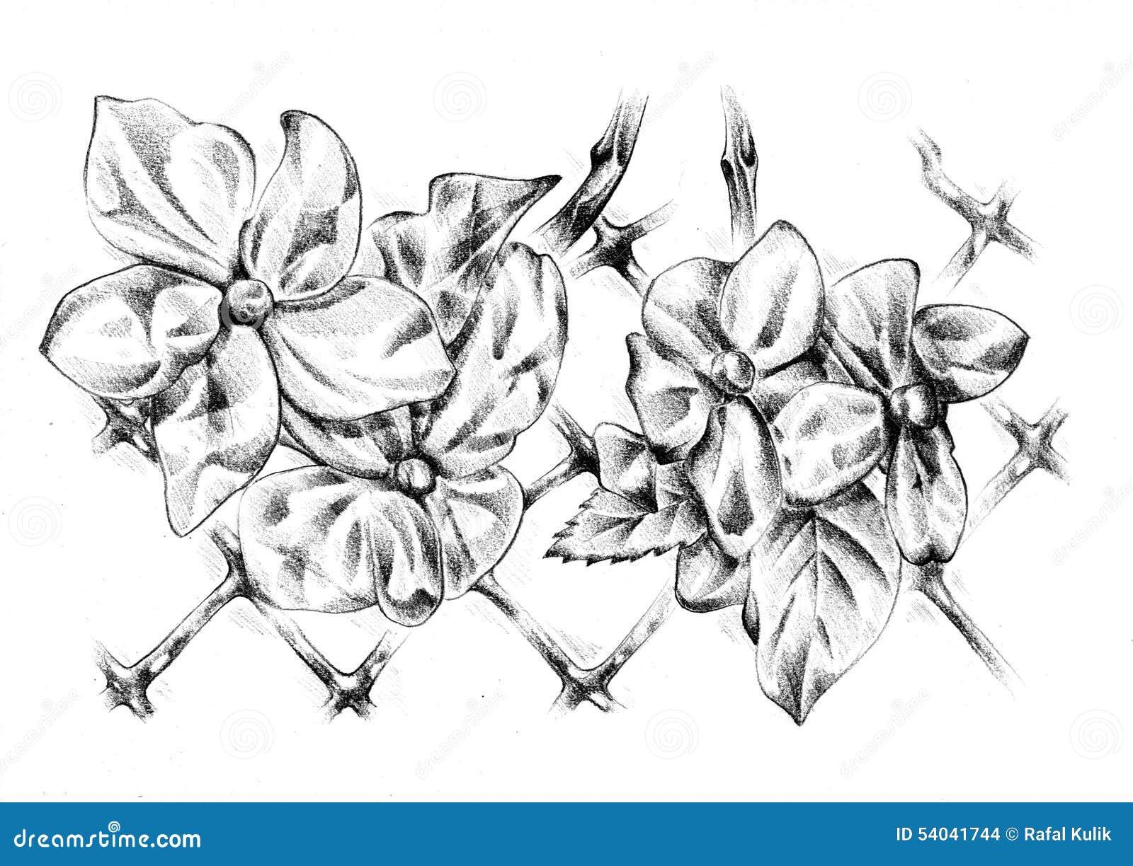Flower Drawing Sketch Art Handmade Stock Illustration Illustration
