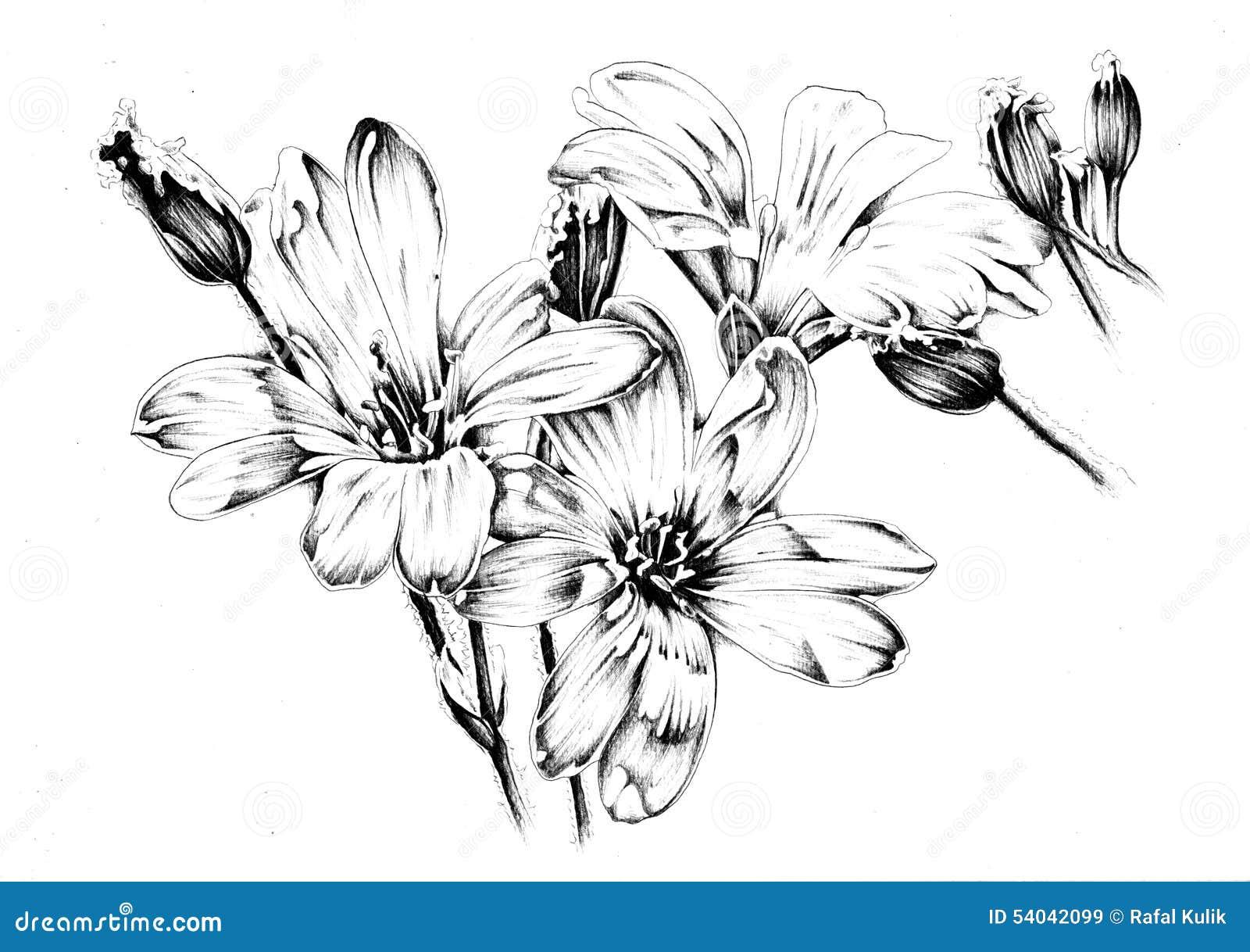 Flower drawing sketch art handmade download preview