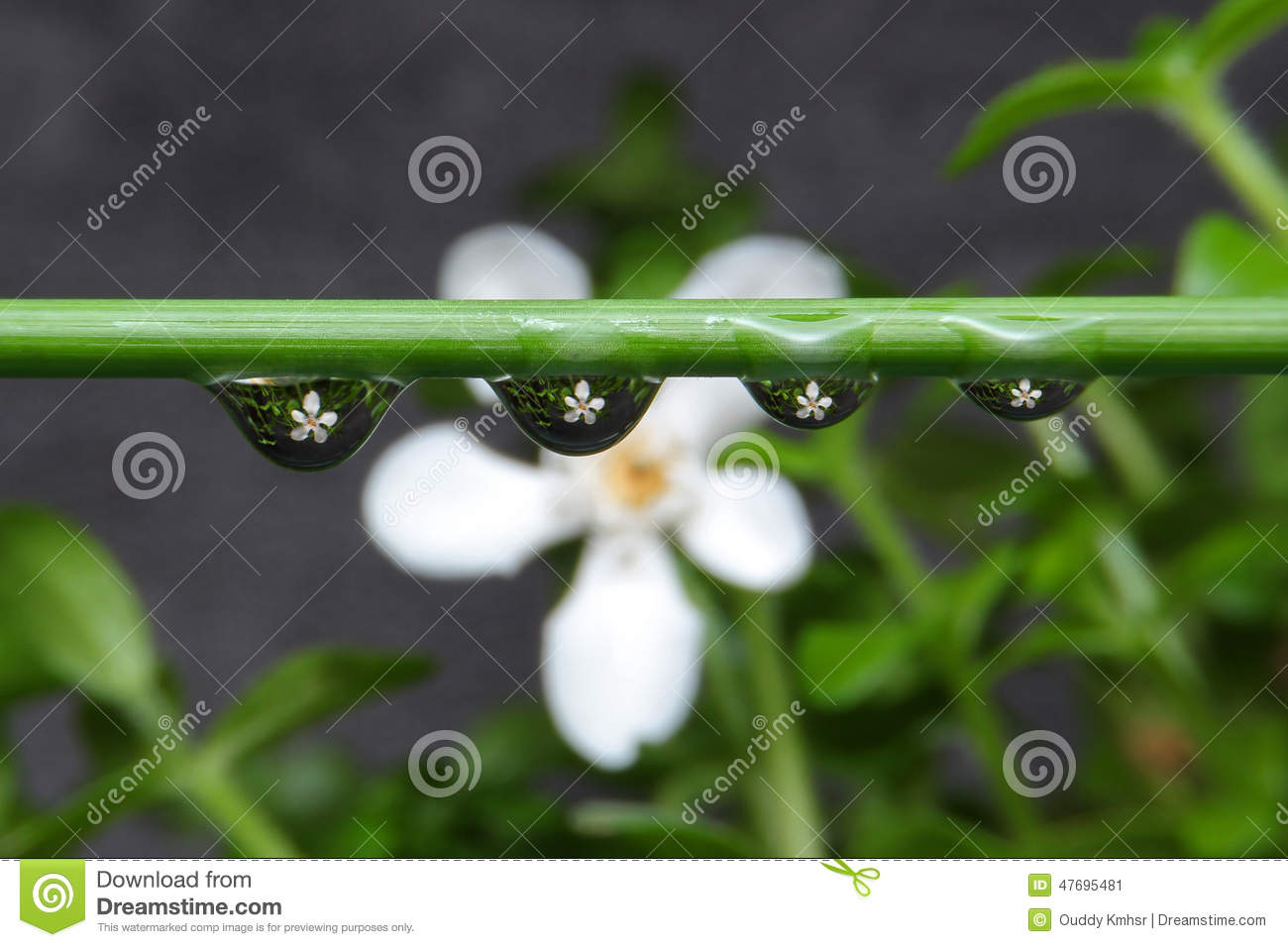 Flower in drop