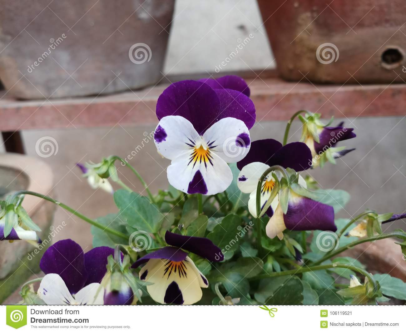 Awessome Purple And White Flowers Stock Image Image Of White