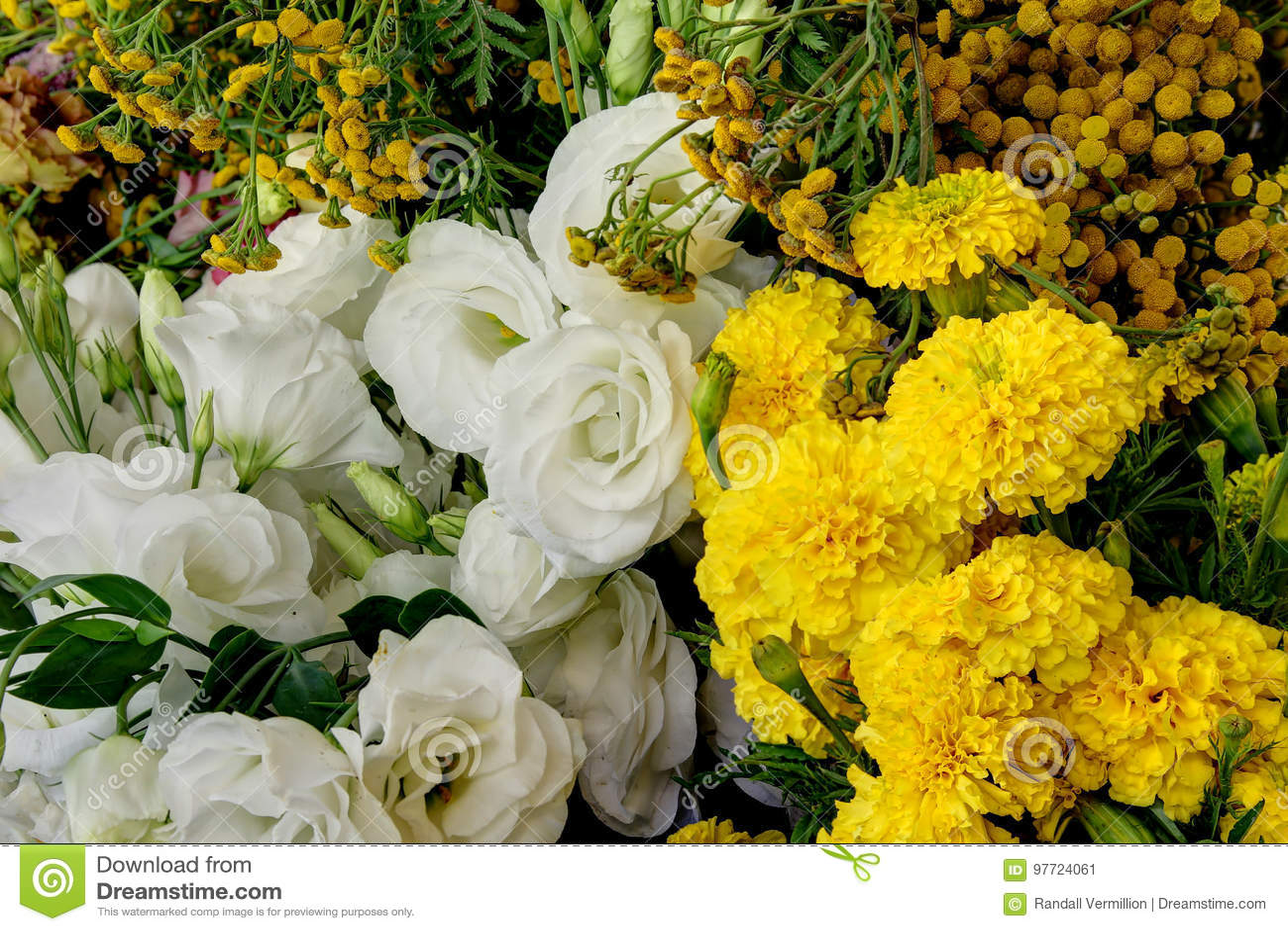 Flower Farm Fresh Picked Flowers Stock Image Image Of White