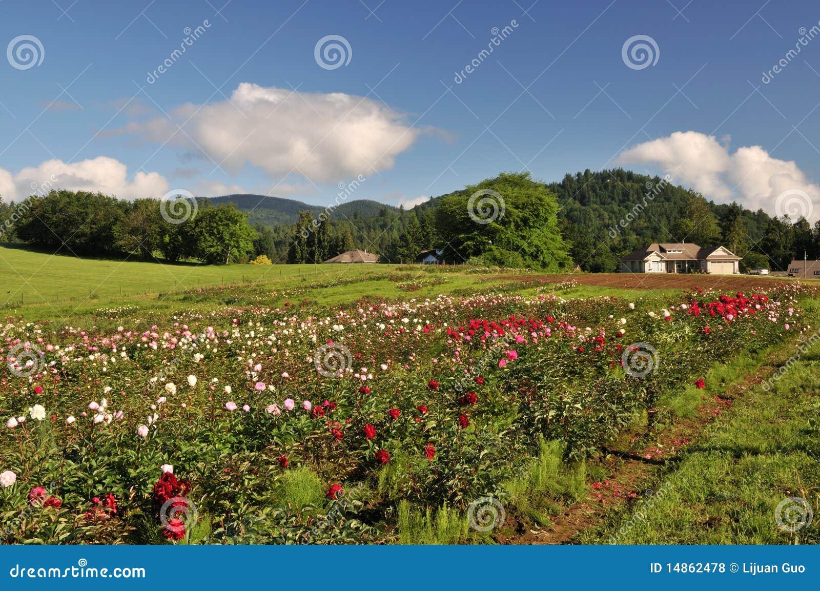 Flower farm in Mission, British Columbia