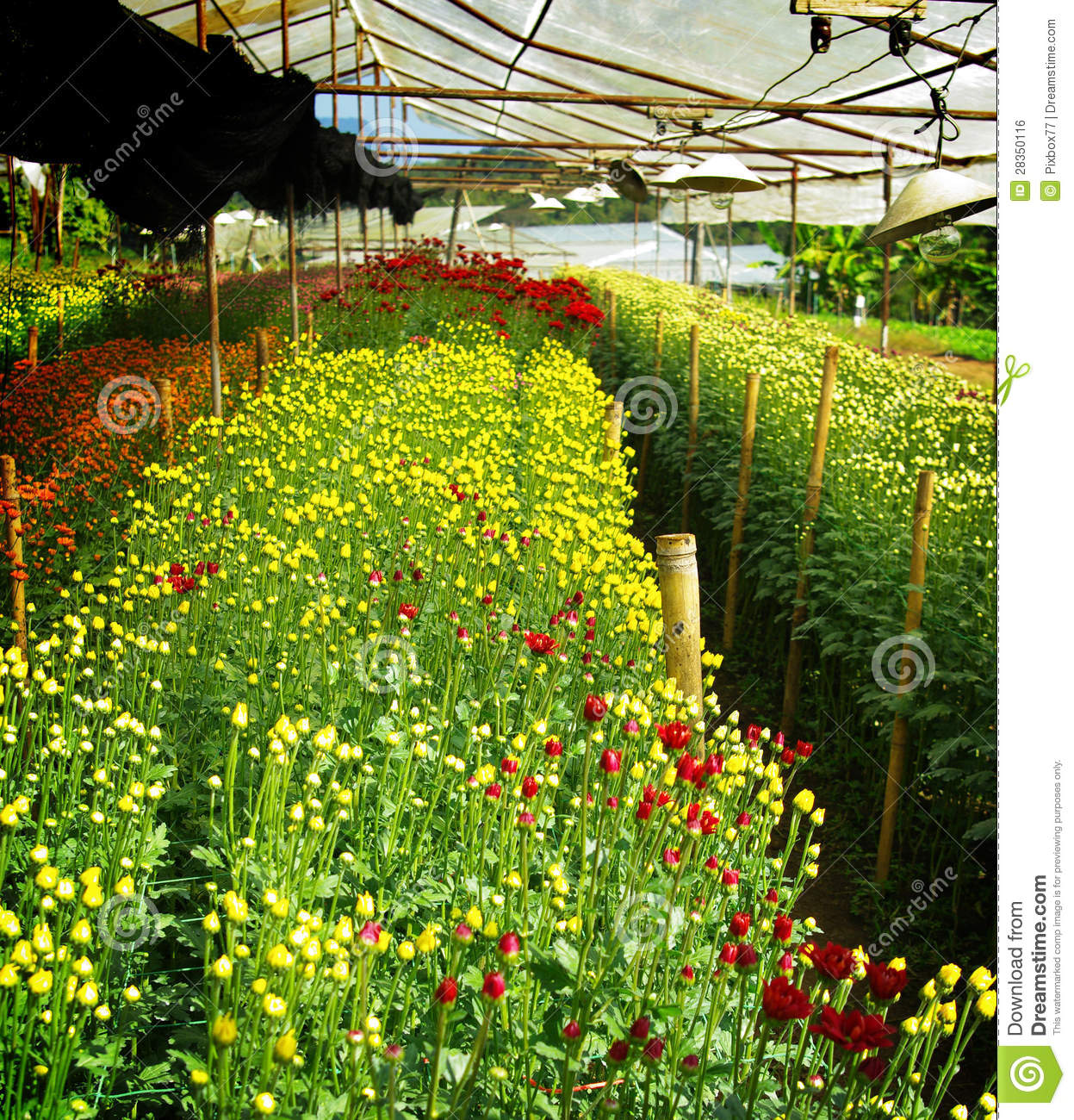 flower farming business plan in india