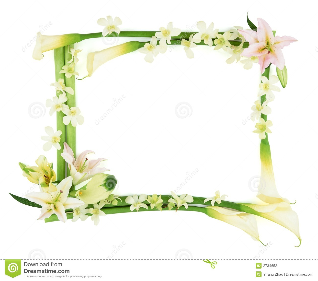 Flower Frame stock photo. Image of picture, hibiscus, rectangle ...