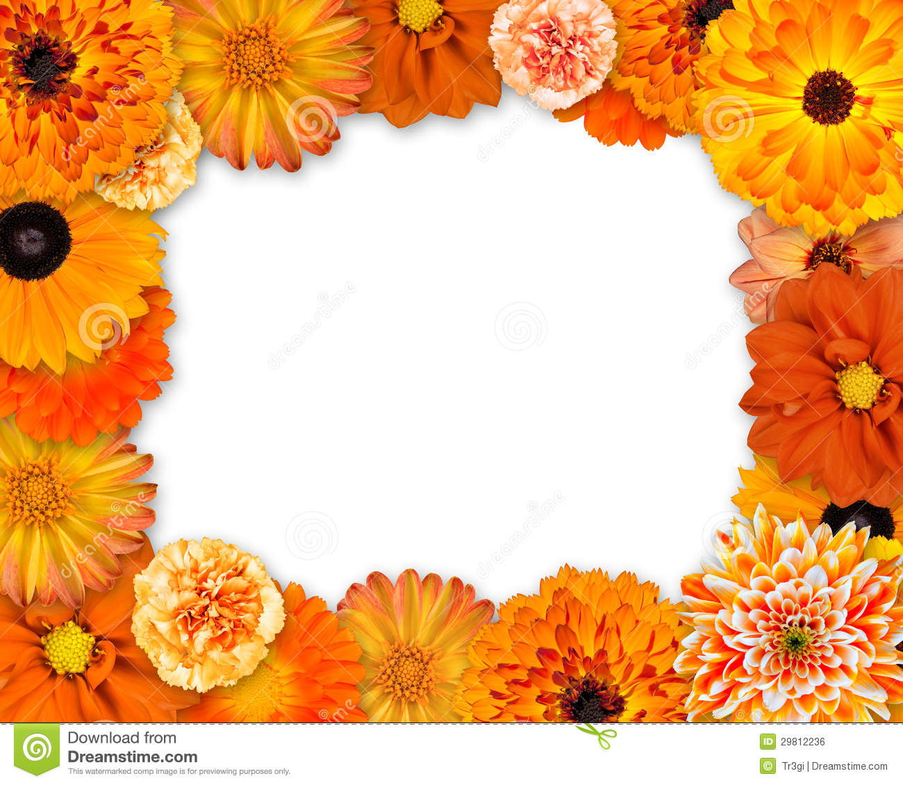Flower Frame With Orange Flowers On White Royalty Free ... White Daisy Flowers Clipart