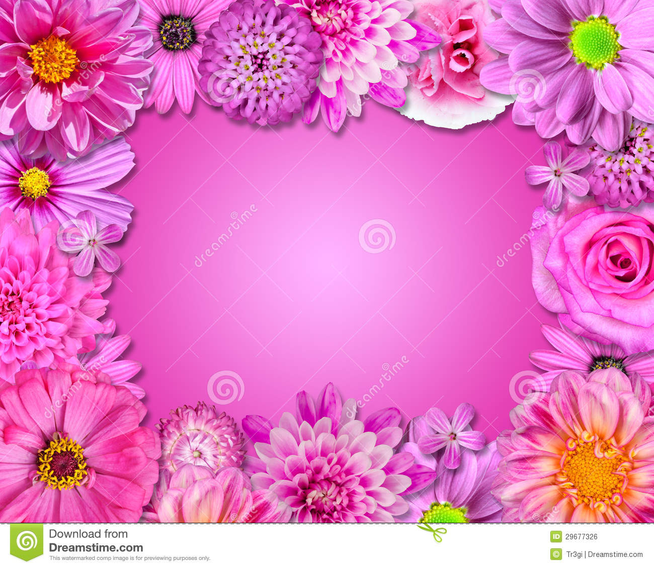 Flower Frame Pink Purple Flowers Stock Photo Image Of Colour
