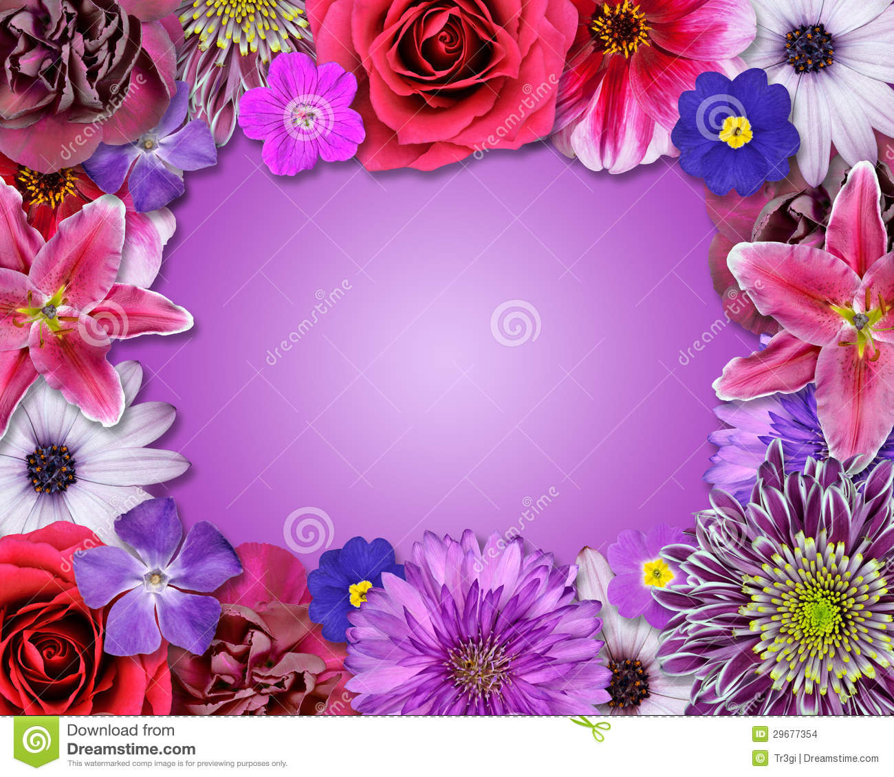 Flower Frame Pink Purple Red Flowers Stock Photo Image Of Gerber