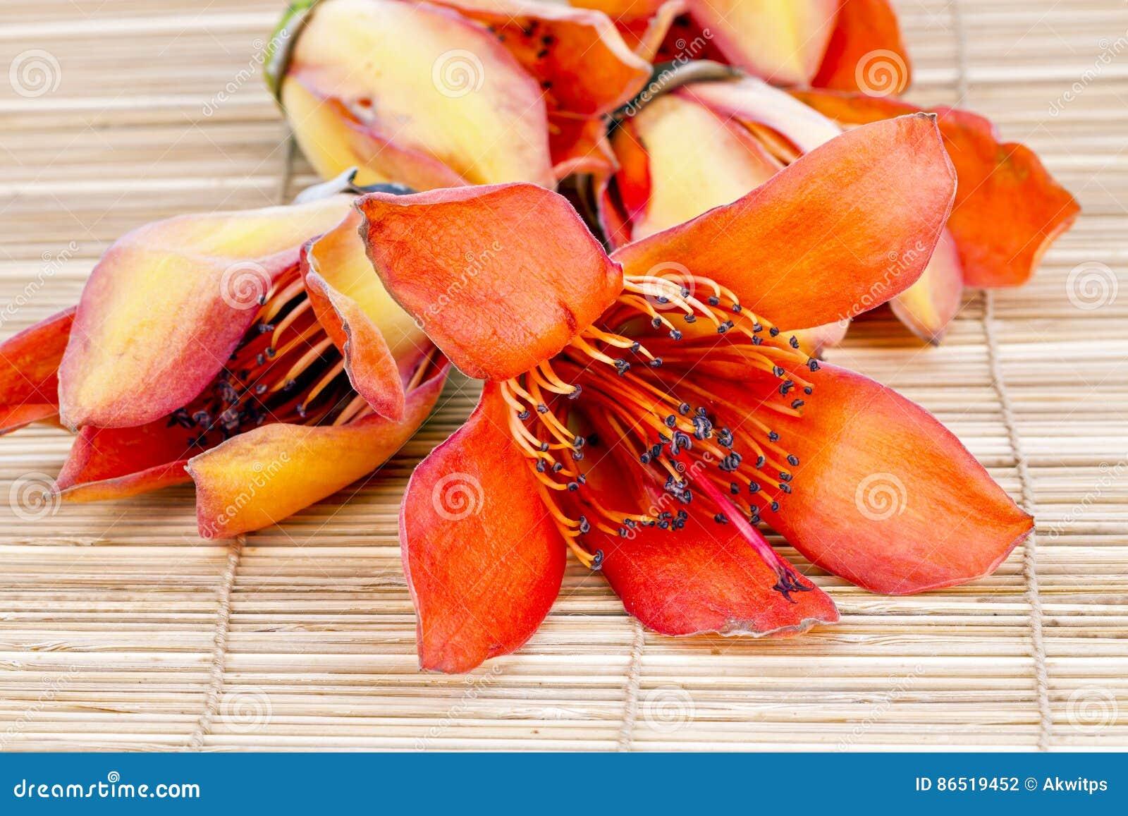 Flower Of Fresh BOMBAX CEIBA LINN - Prepare For Drying Androecium