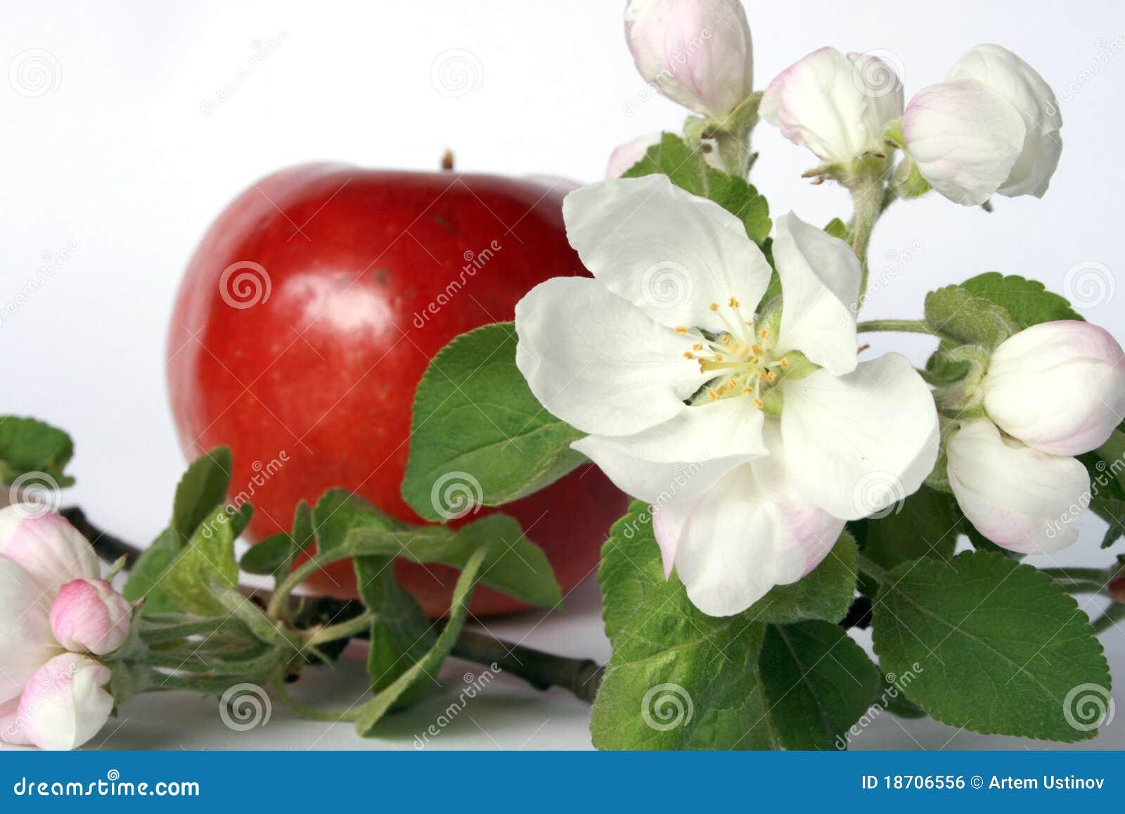 Flower And Fruit Royalty Free Stock Image Image 18706556