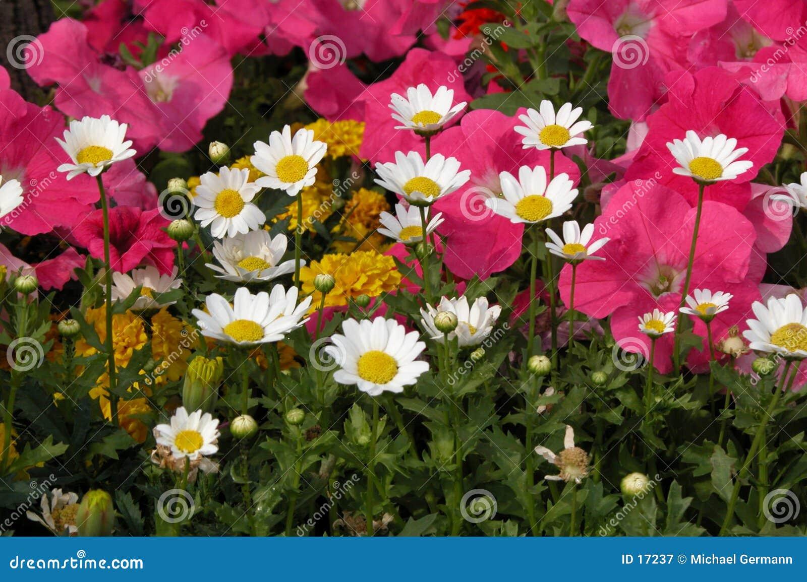 Flower Garden Stock Image. Image Of Bloom, Garden, Plant
