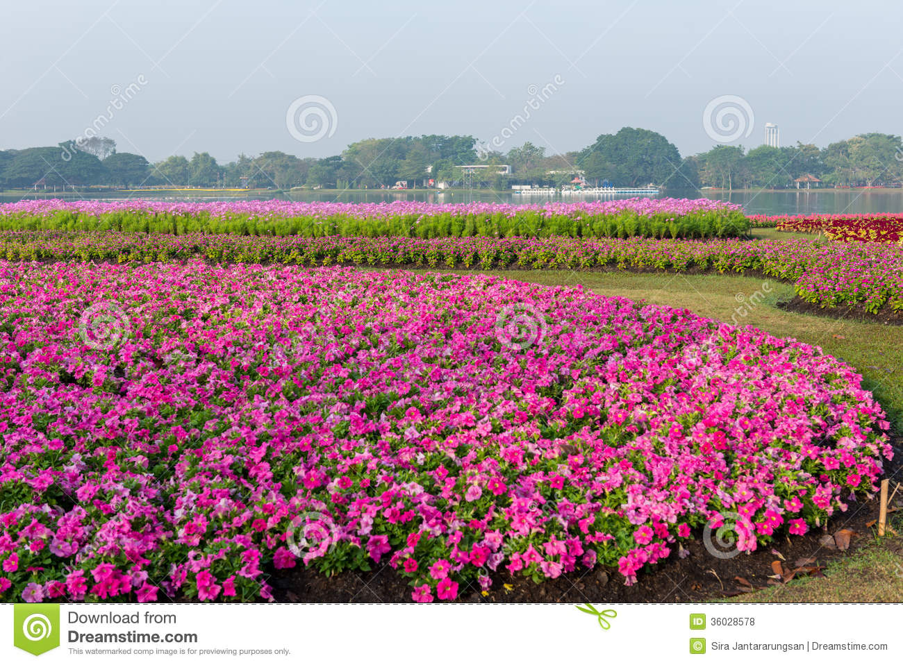 flower garden background stock photo image of gardening 36028578. Black Bedroom Furniture Sets. Home Design Ideas