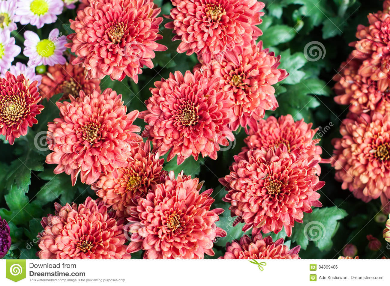 Flower In Garden, Beautiful Colorful Flowers Which Grew With The ...