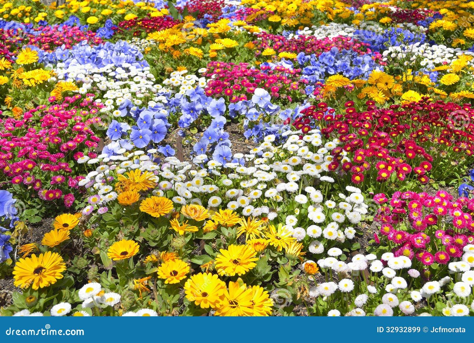 Download Flower Garden stock image. Image of orchids, spring, pollen - 32932899