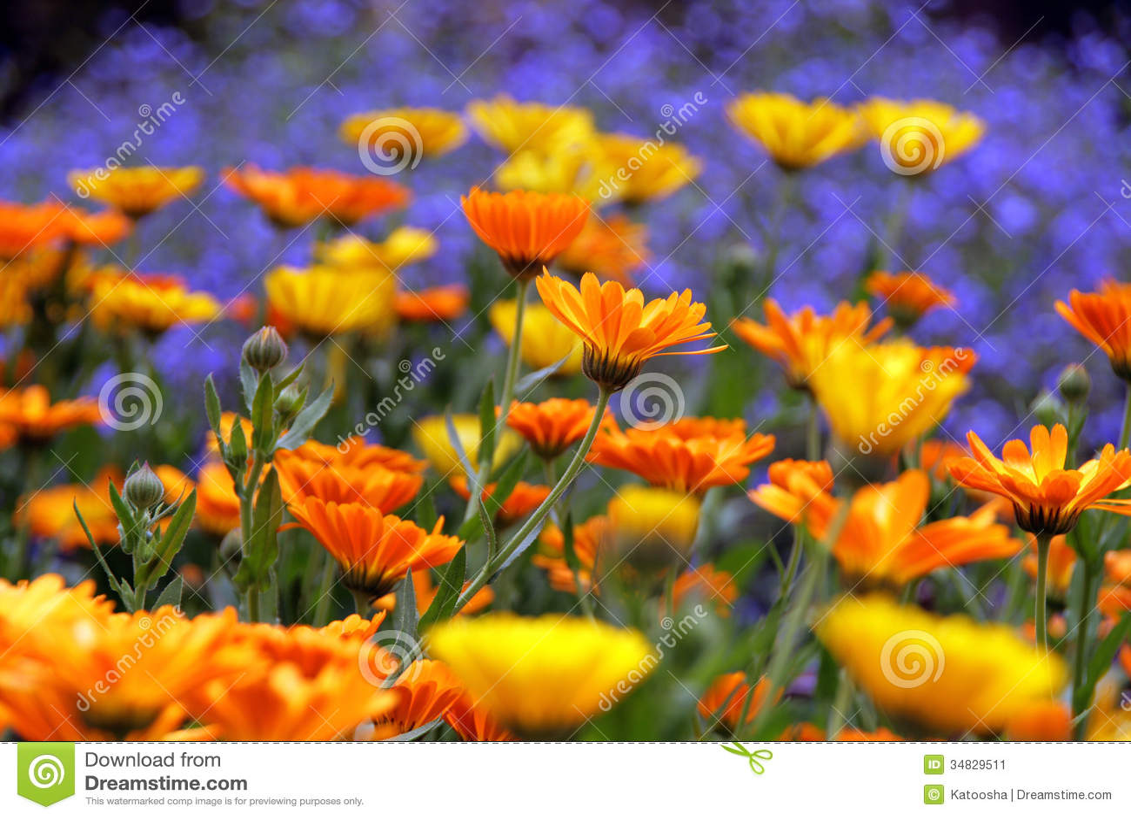 flower garden stock image. image of up, leaves, blossom - 34829511