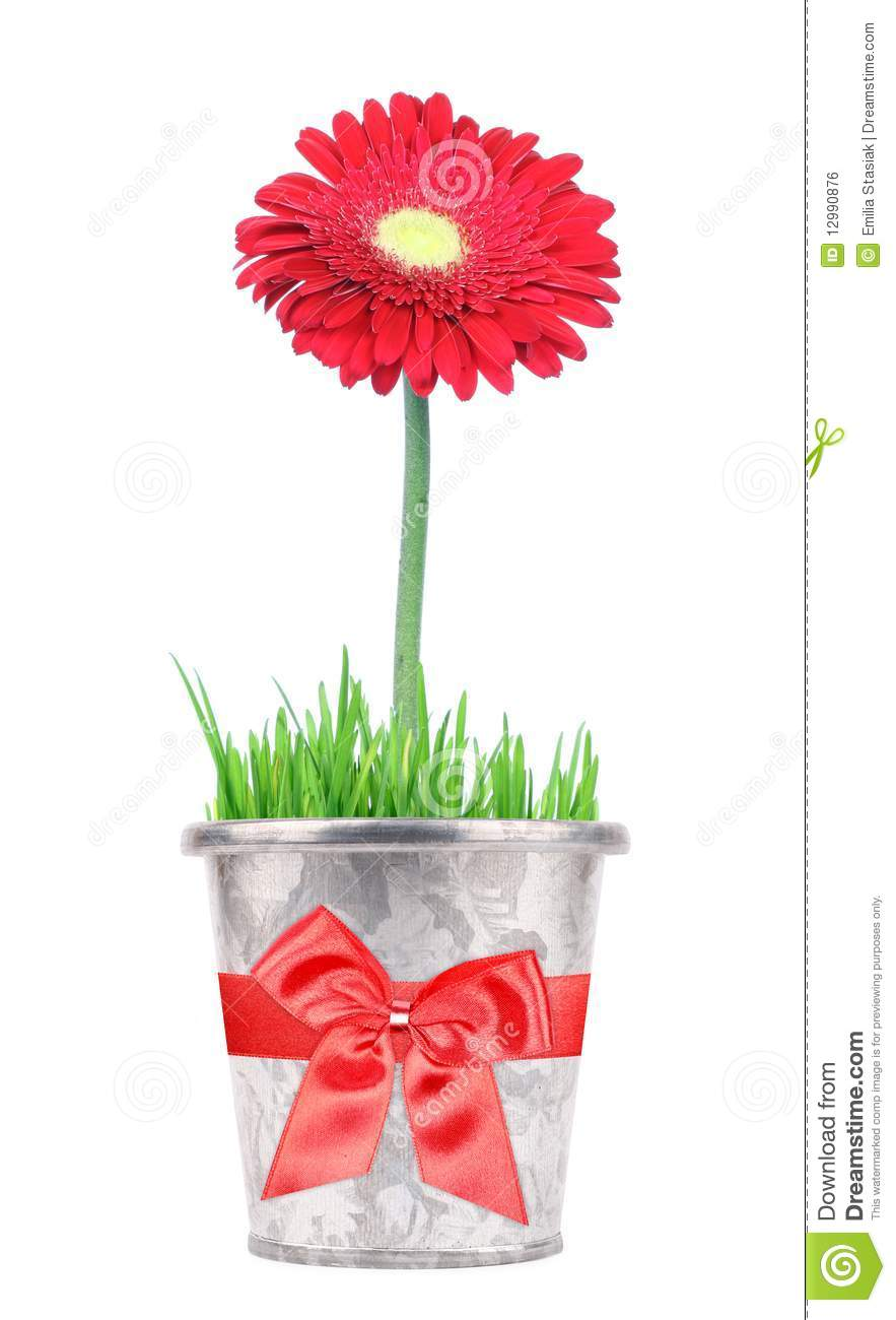 Free business plan for a flowergift shop