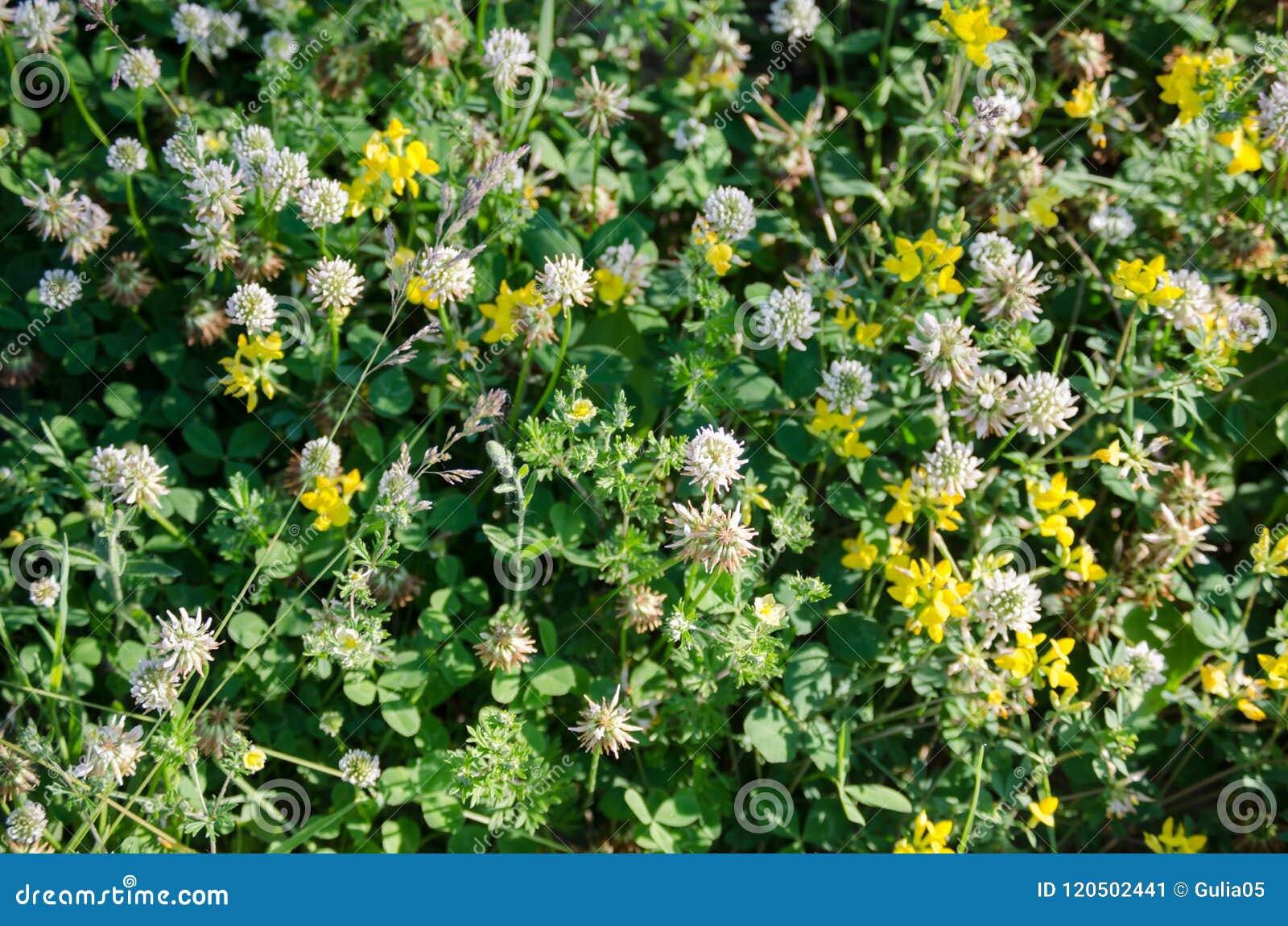 Flower glade, meadow flowers.