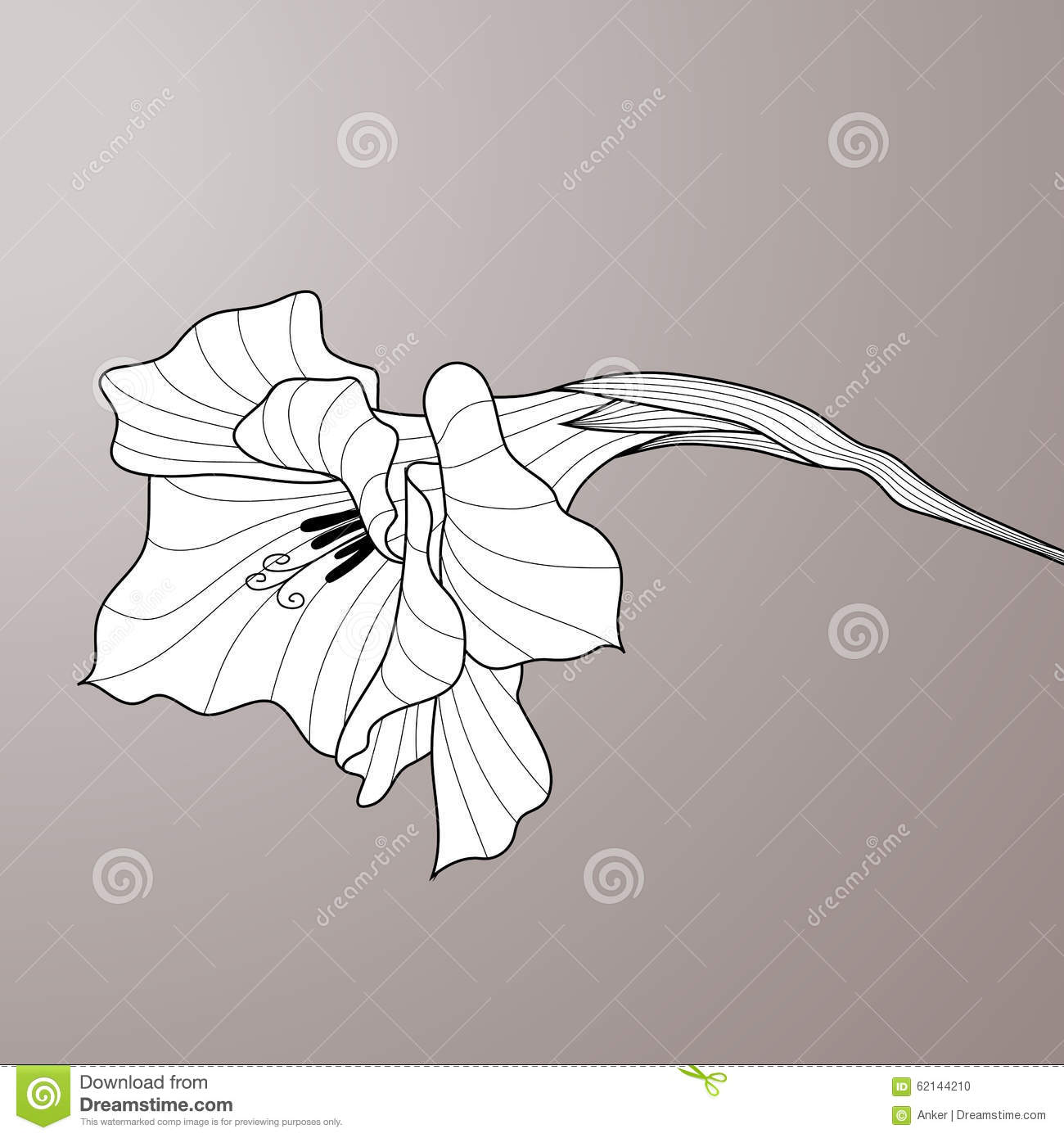 Contour Line Drawing Of A Flower : Flower gladiolus contour graphic art stock vector