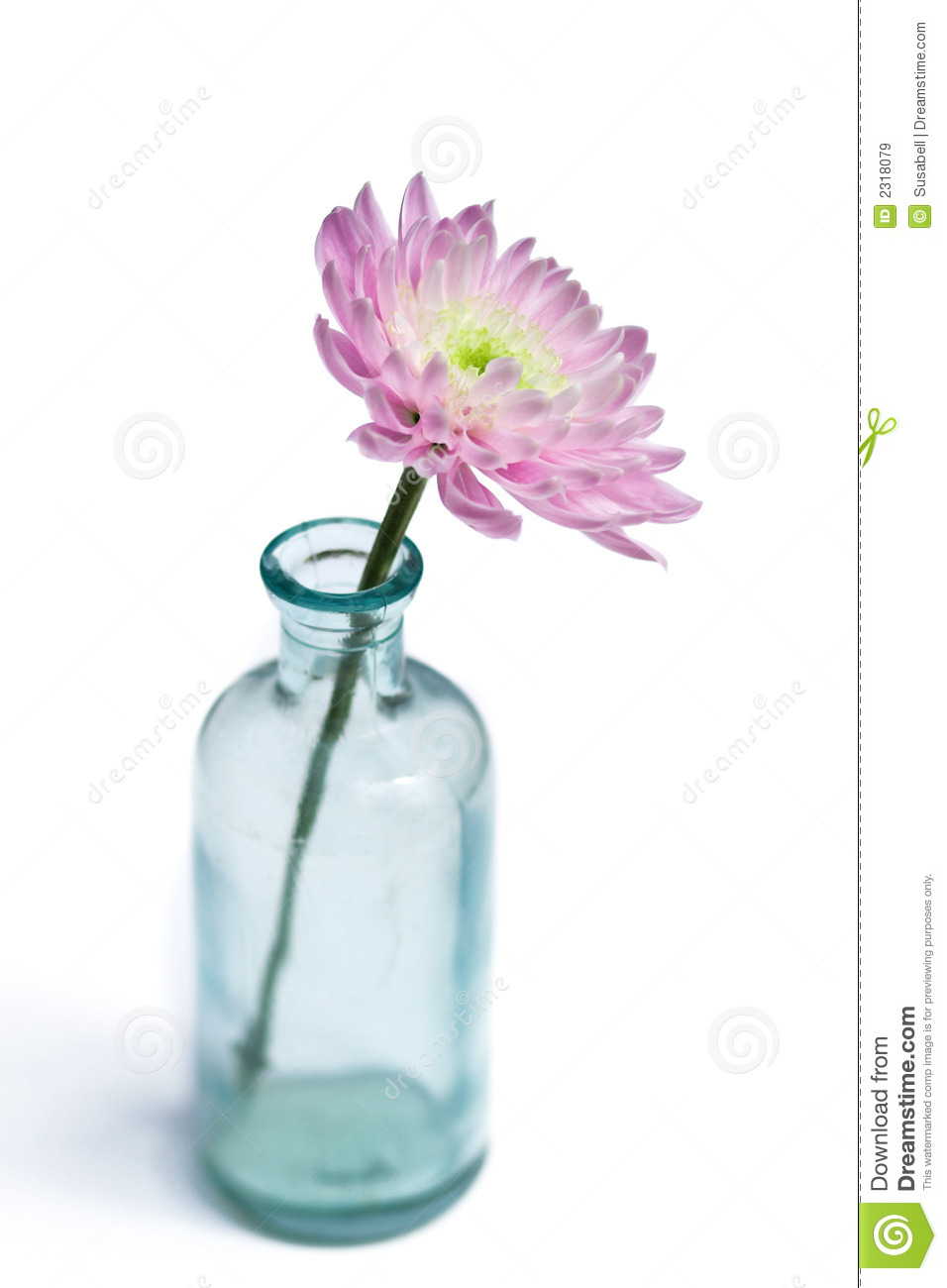 Flower in glass vase stock image image of life fresh 2318079 flower in glass vase reviewsmspy