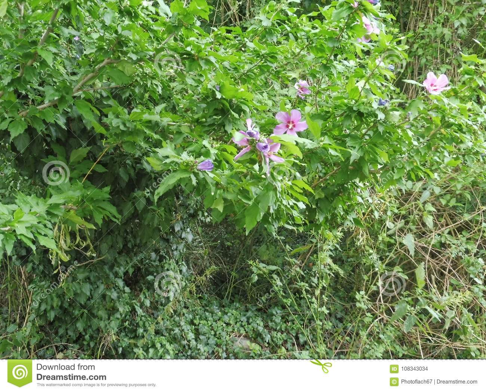 Flower Green Sappy Relaxing Restful Soothing Refreshing Background Bottom Wallpaper Vegetation
