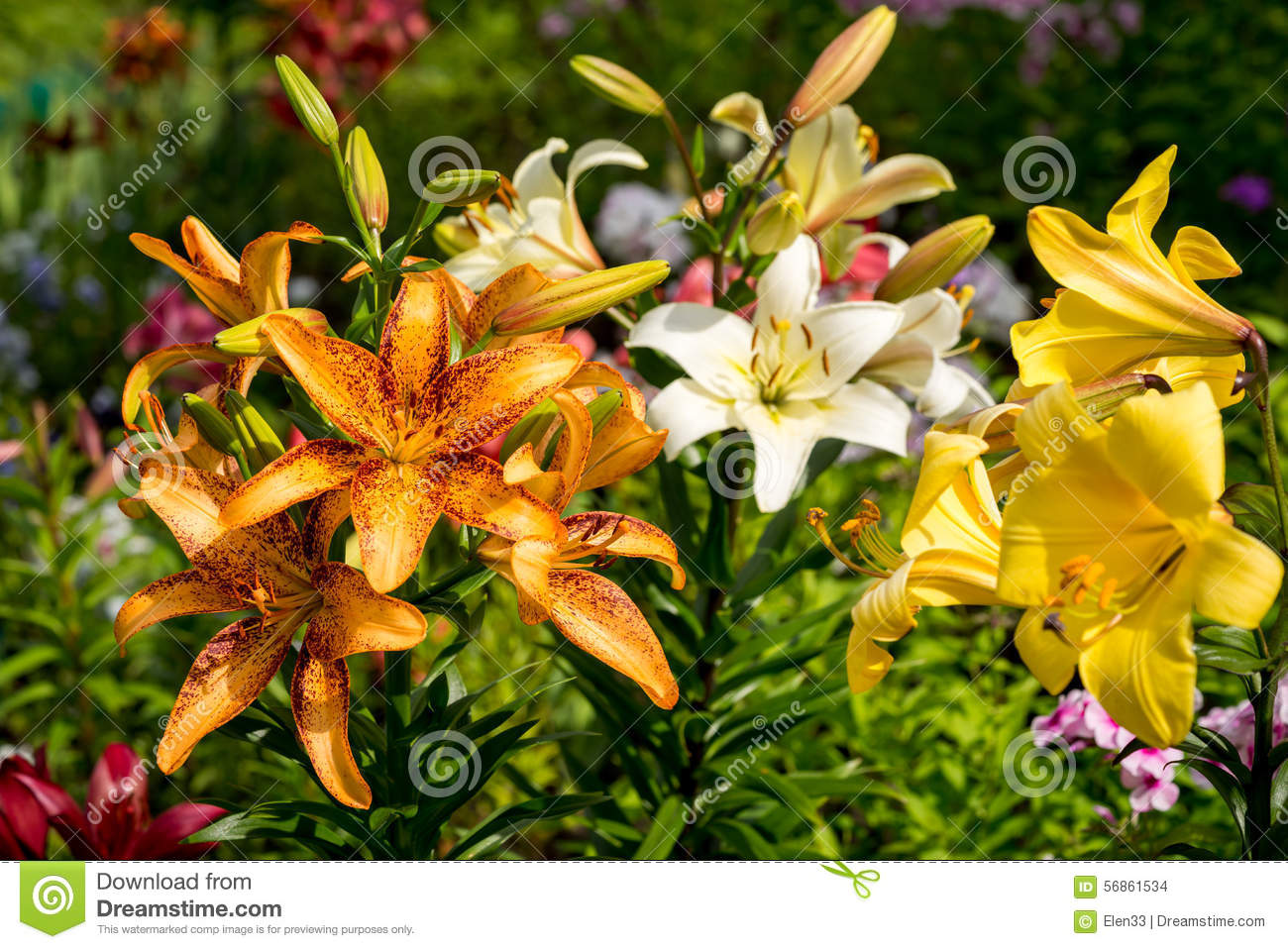 Flower stock photo image of green many garden growing 56861534 download comp izmirmasajfo