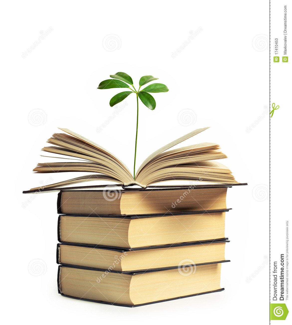 a515bc0533841 A Flower Growing Out Of An Open Book Stock Image - Image of green ...