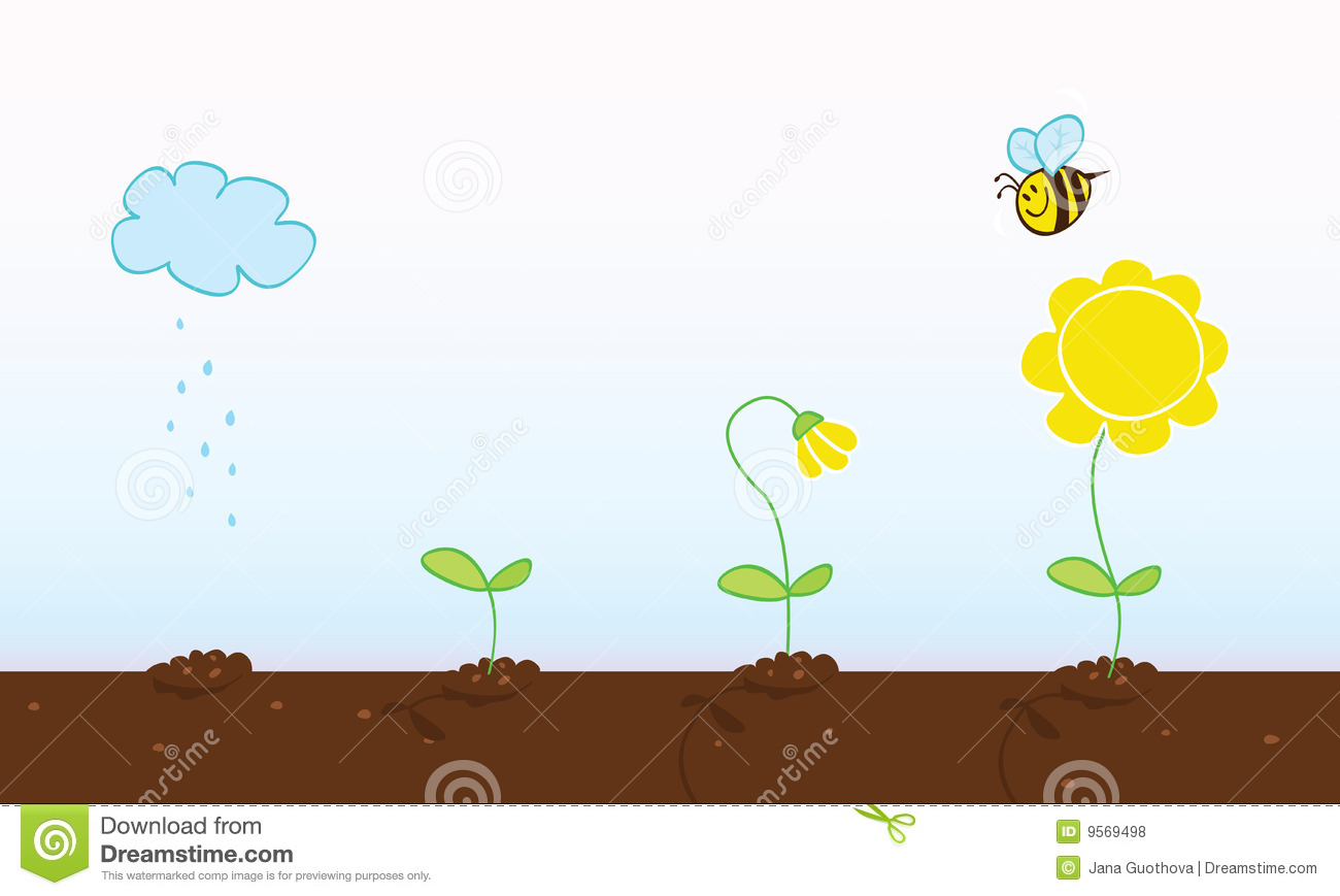 ... growing stages\x3c/b\x3e royalty free stock photos - image: 9569498: galleryhip.com/flower-growing-stages.html