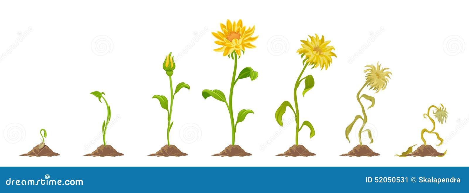 a bee on sunflower clip art