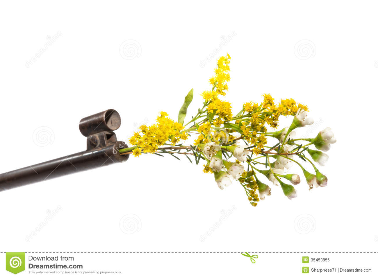 Gun Flowers | www.pixshark.com - Images Galleries With A Bite!