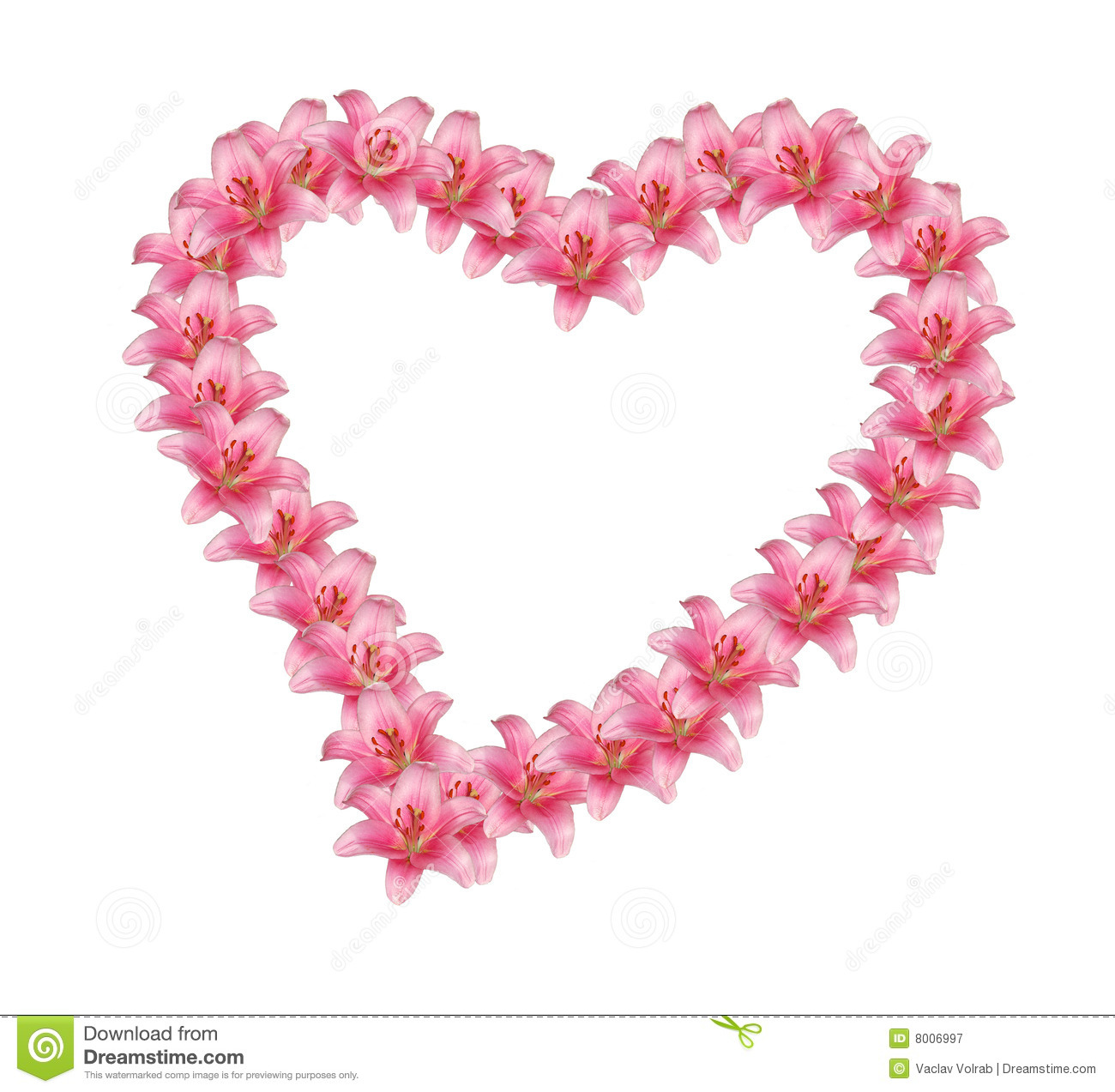 Flower Heart Stock Image Image Of Garden February Holiday 8006997