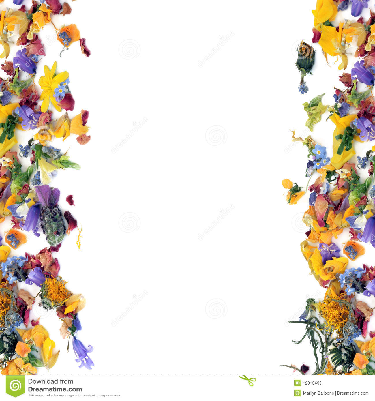 Flowers and herb leaf selection forming an abstract border, over white ...