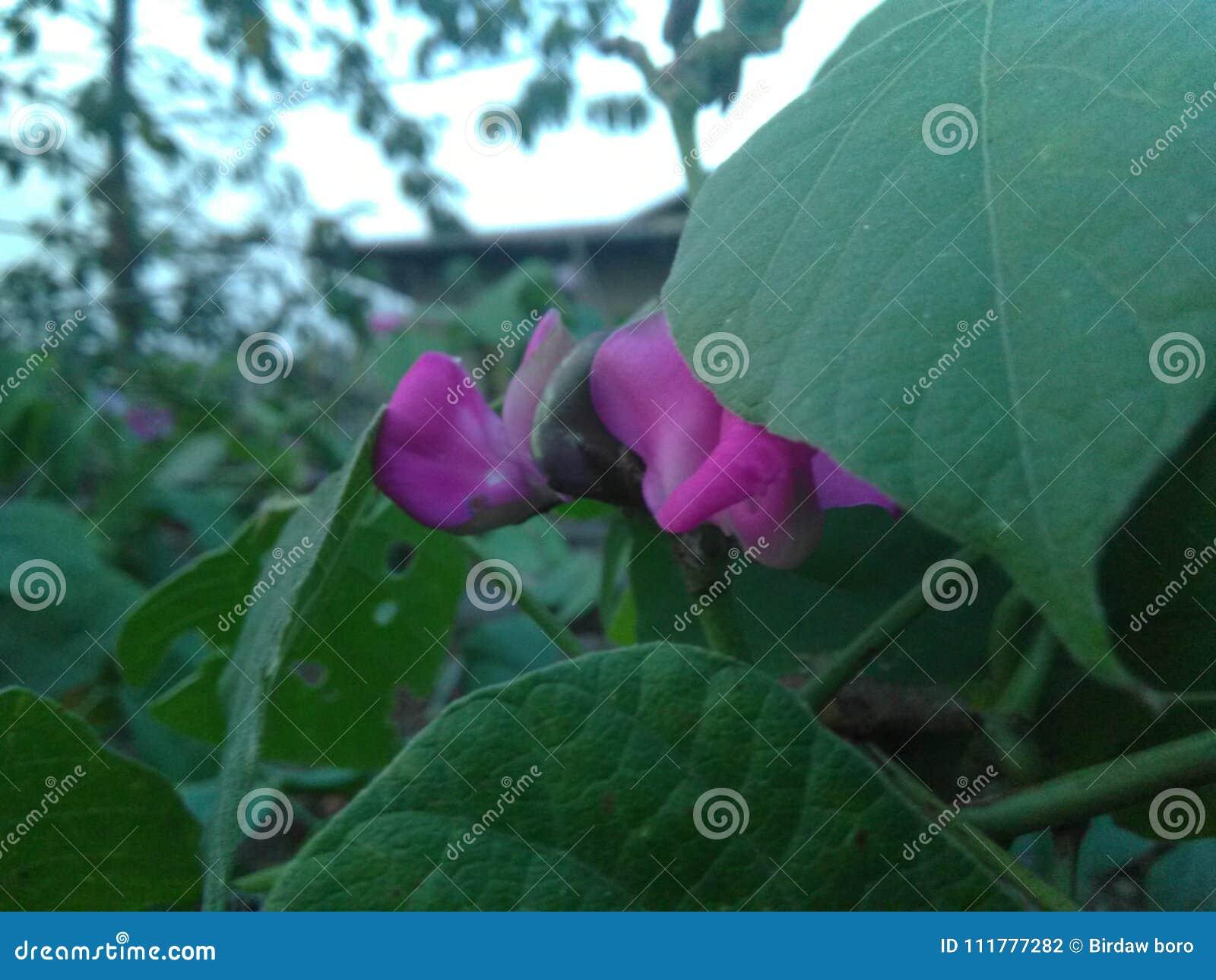 Flower hiding between leaves
