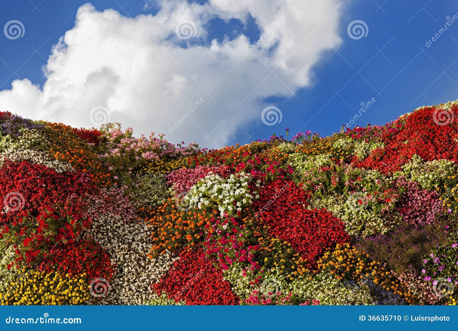 Flower hill for Flower hill farms