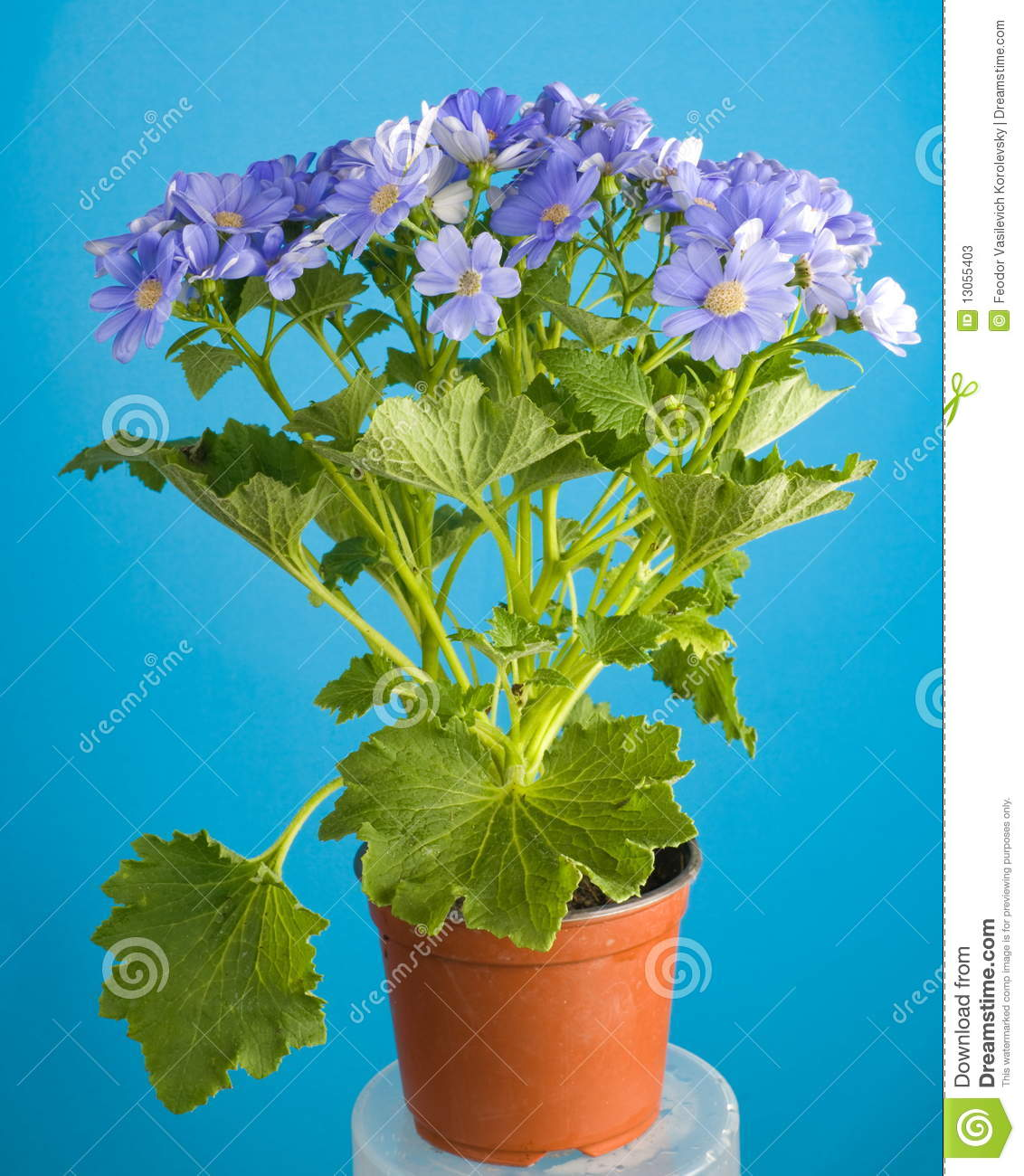 Flower From A Hothouse Stock s Image
